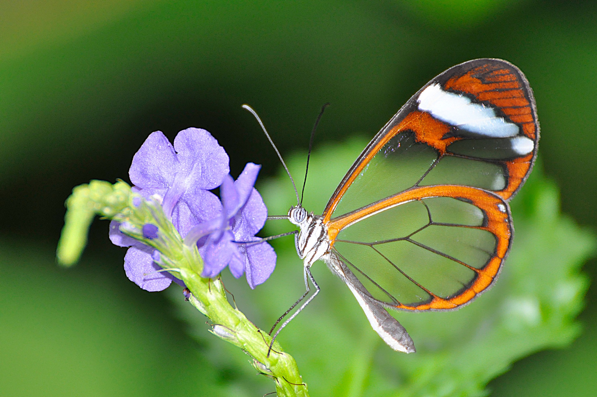 Butterfly with windows by Louis Frielink
