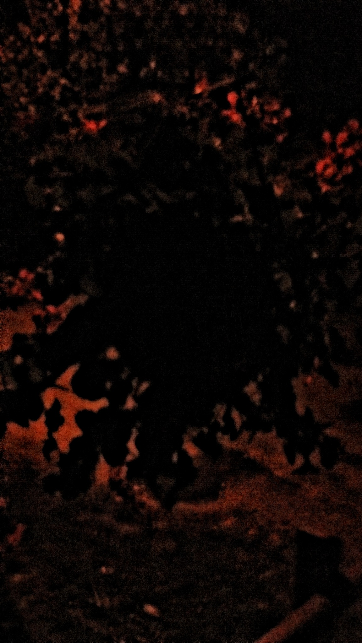 nightime 1 by Mark Barecki