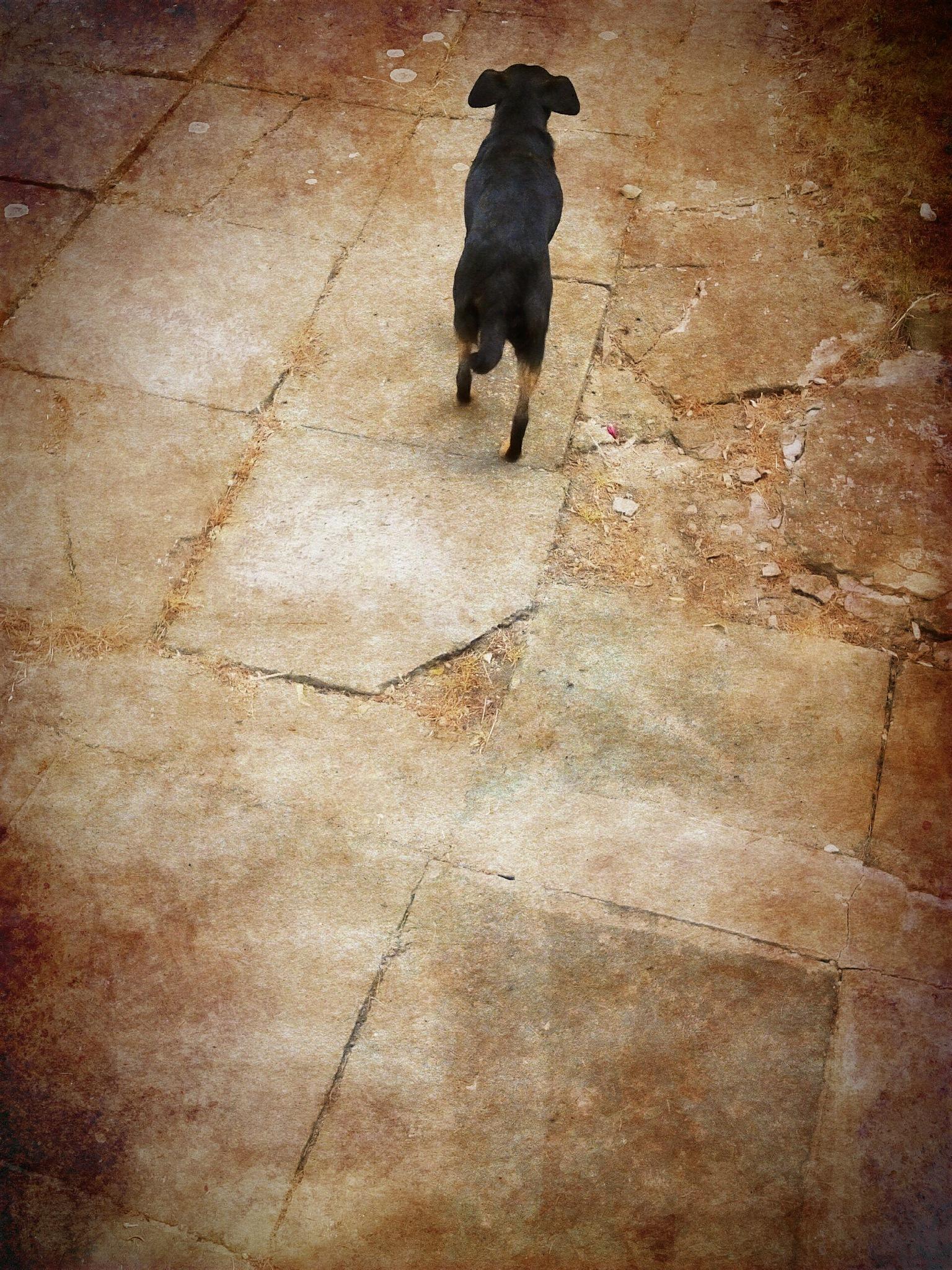 dog by Mark Barecki