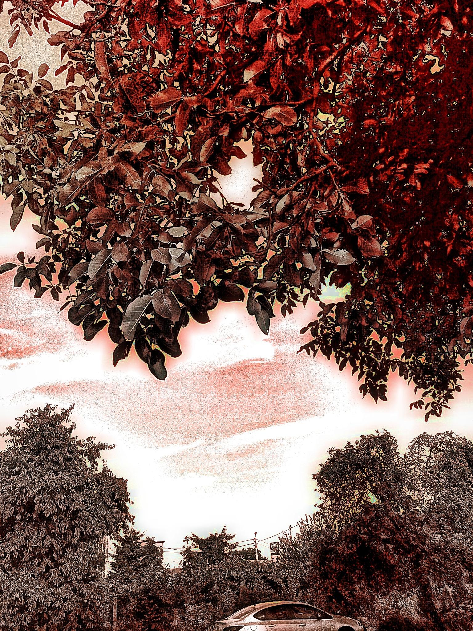 landscape by Mark Barecki