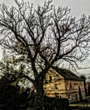 tree by Mark Barecki