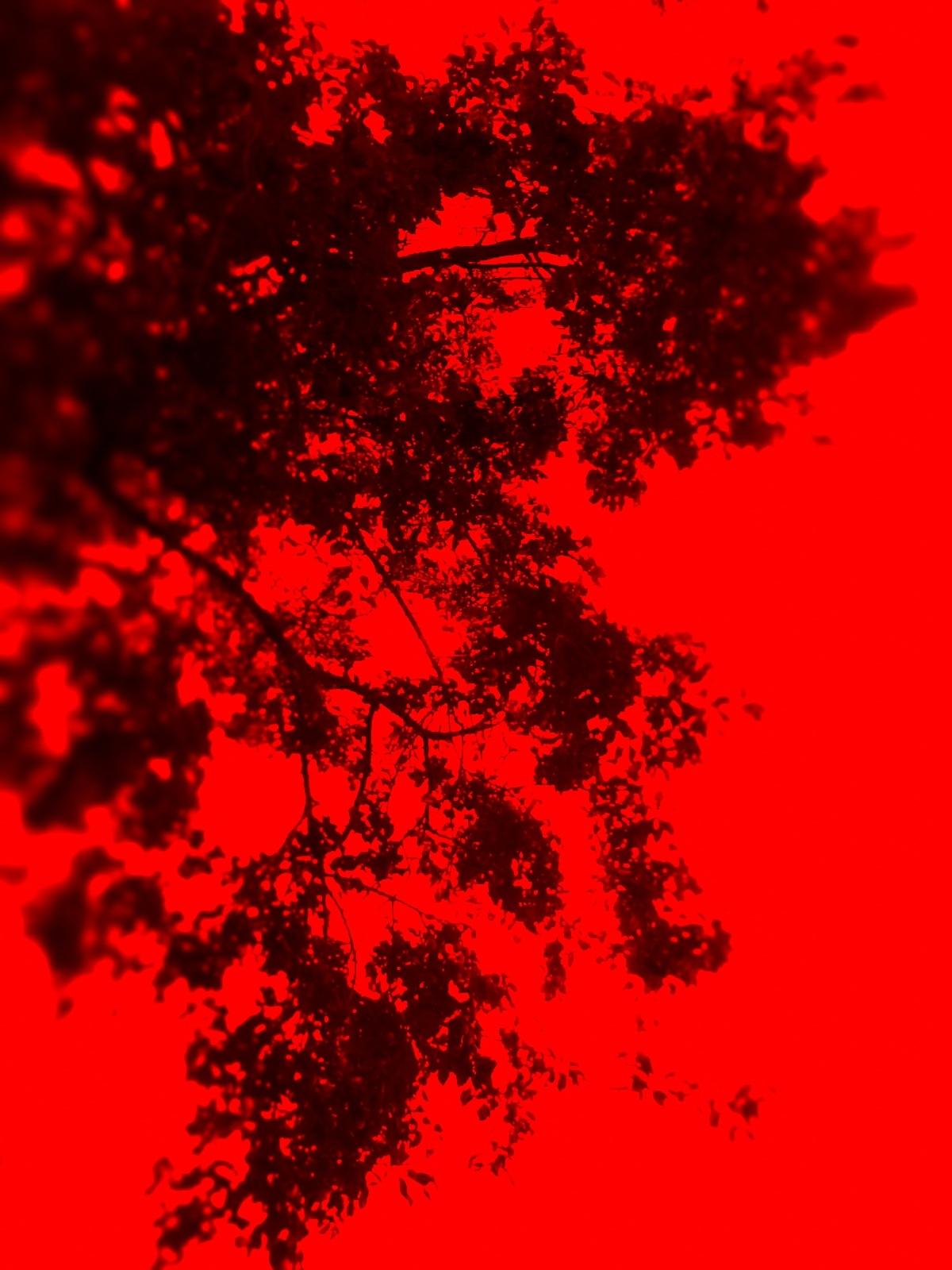 deep red by Mark Barecki
