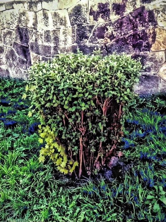 bush by Mark Barecki