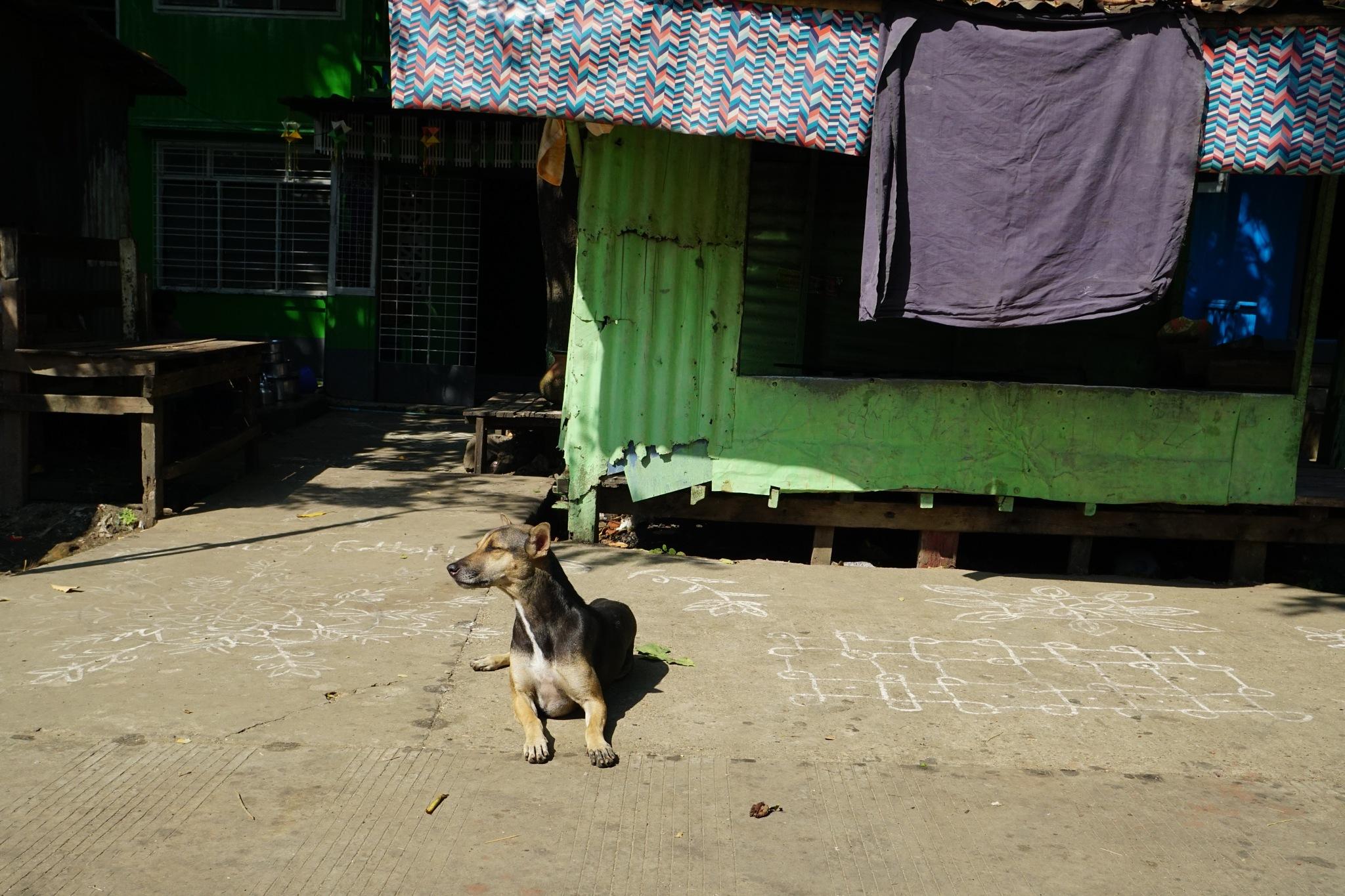 Photo in Street Photography #dod #sunbathing #myanmar