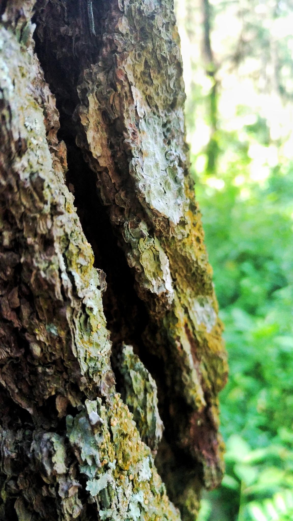 Tree by Bavner Donaldo