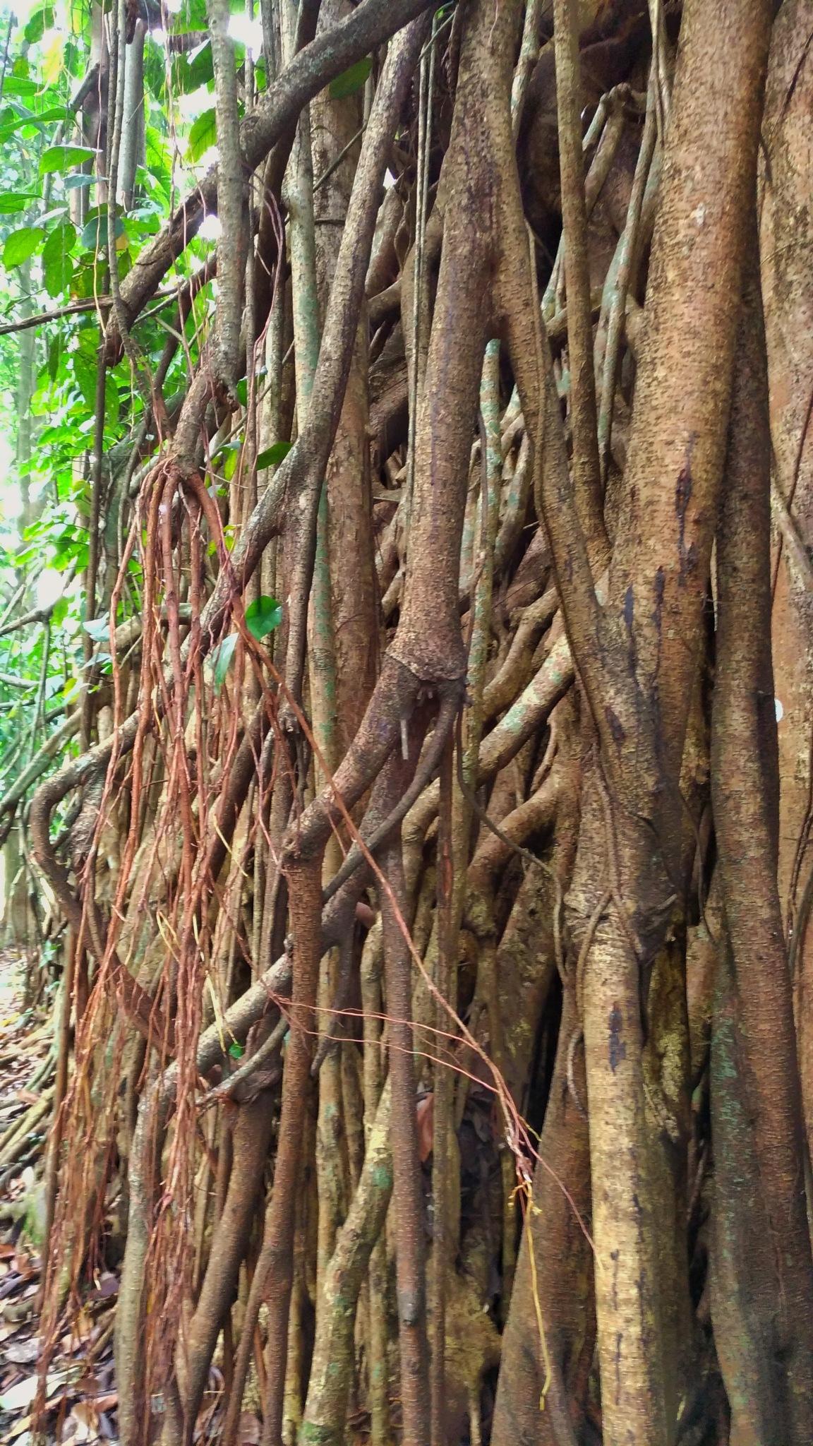 Hanging Roots by Bavner Donaldo
