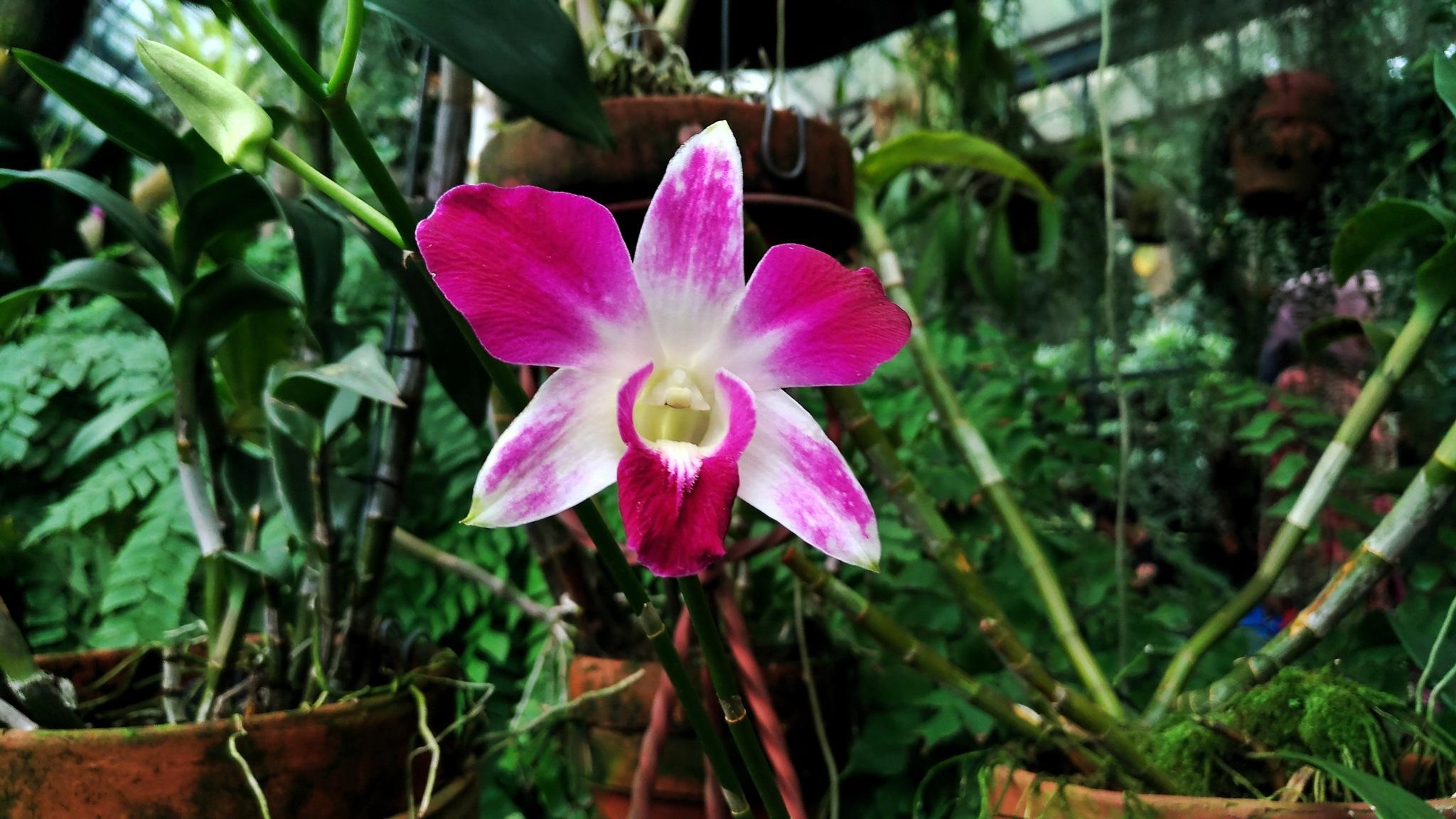 Orchid by Bavner Donaldo