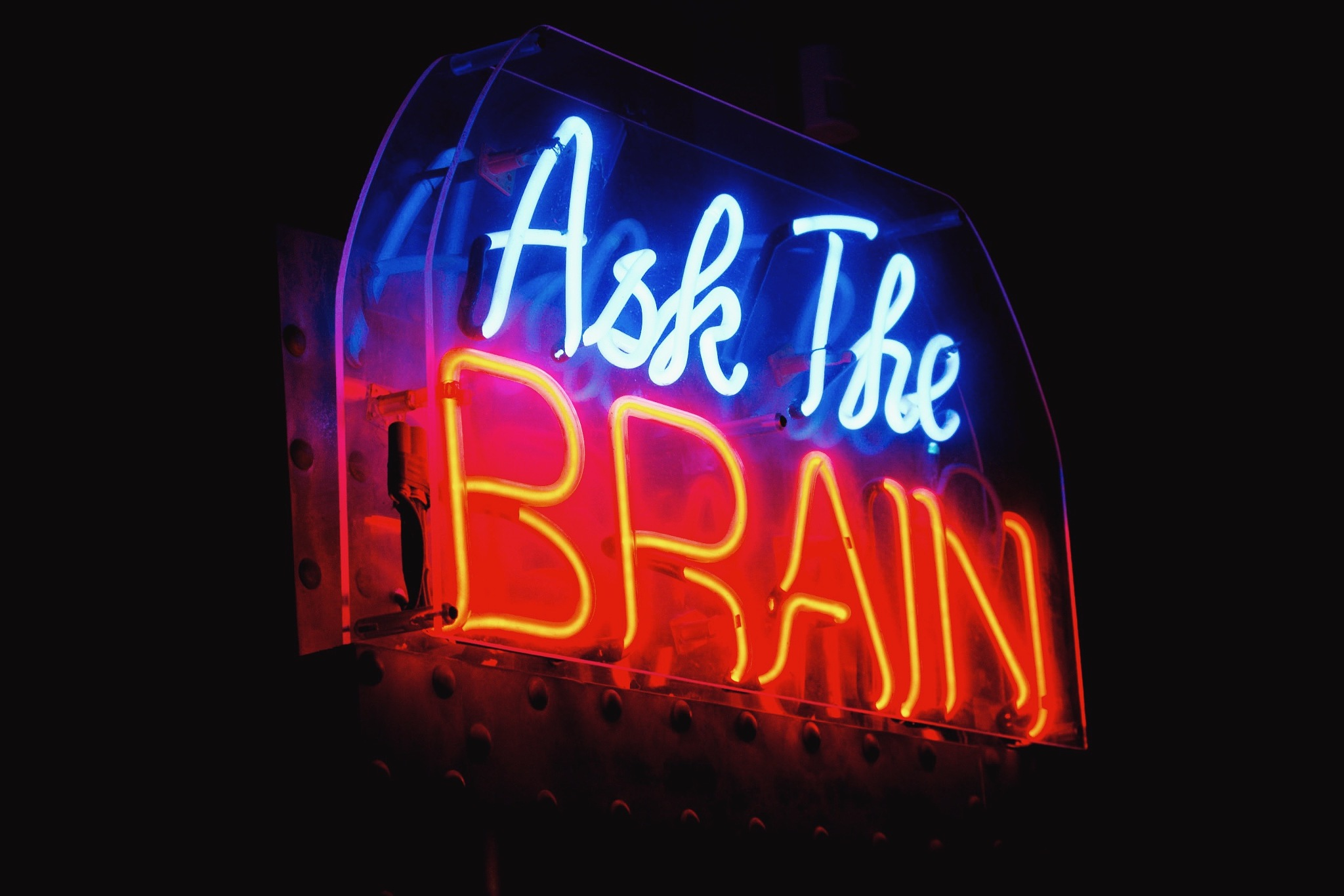 Ask The Brain by amber rose borsotti
