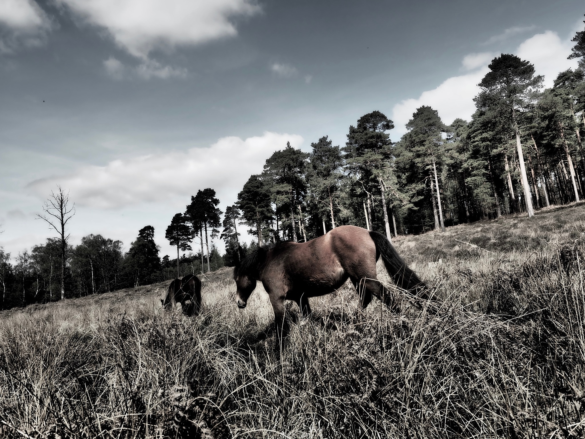 Wild horses by David Oliver