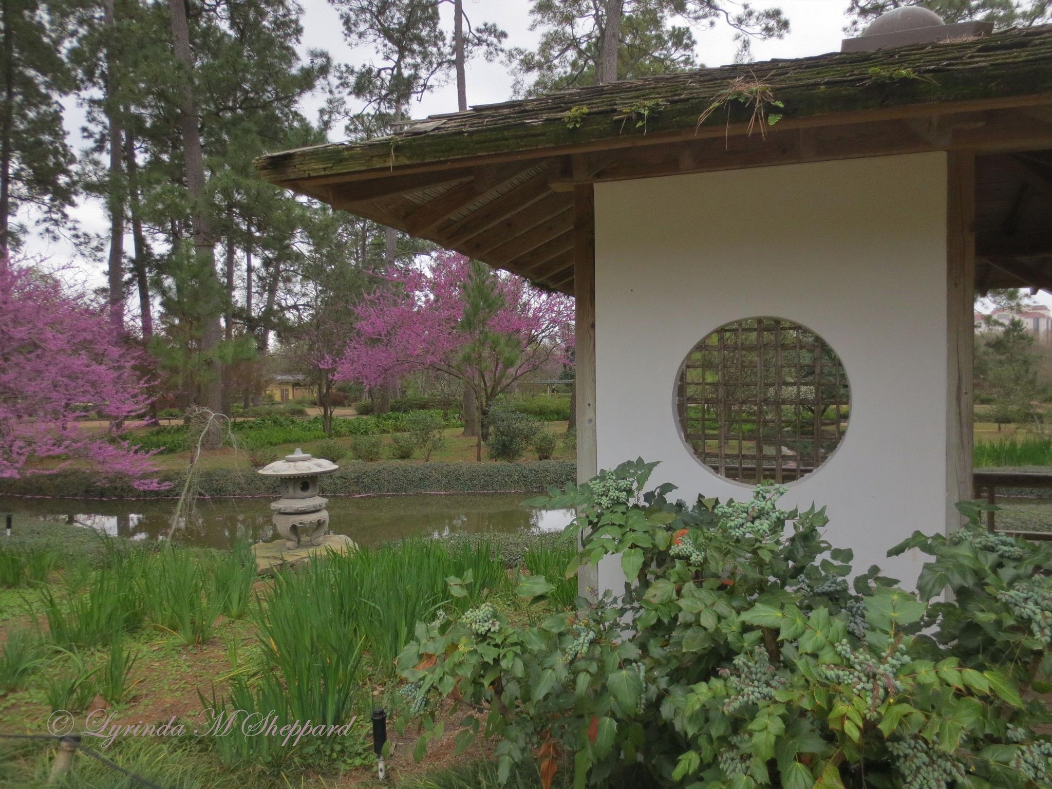 Japanese garden in spring by Lyrinda Sheppard
