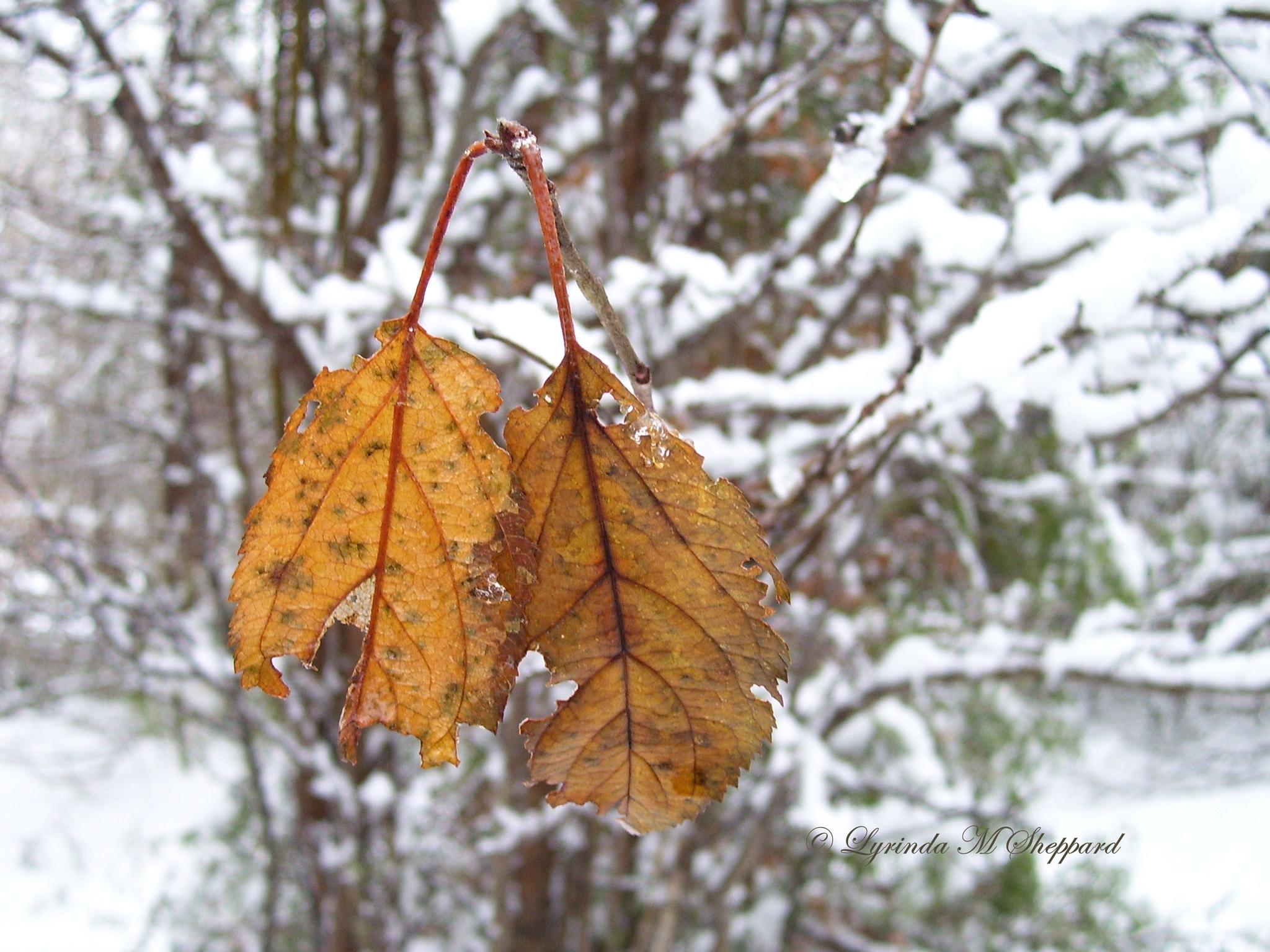 In the dead of winter... by Lyrinda Sheppard