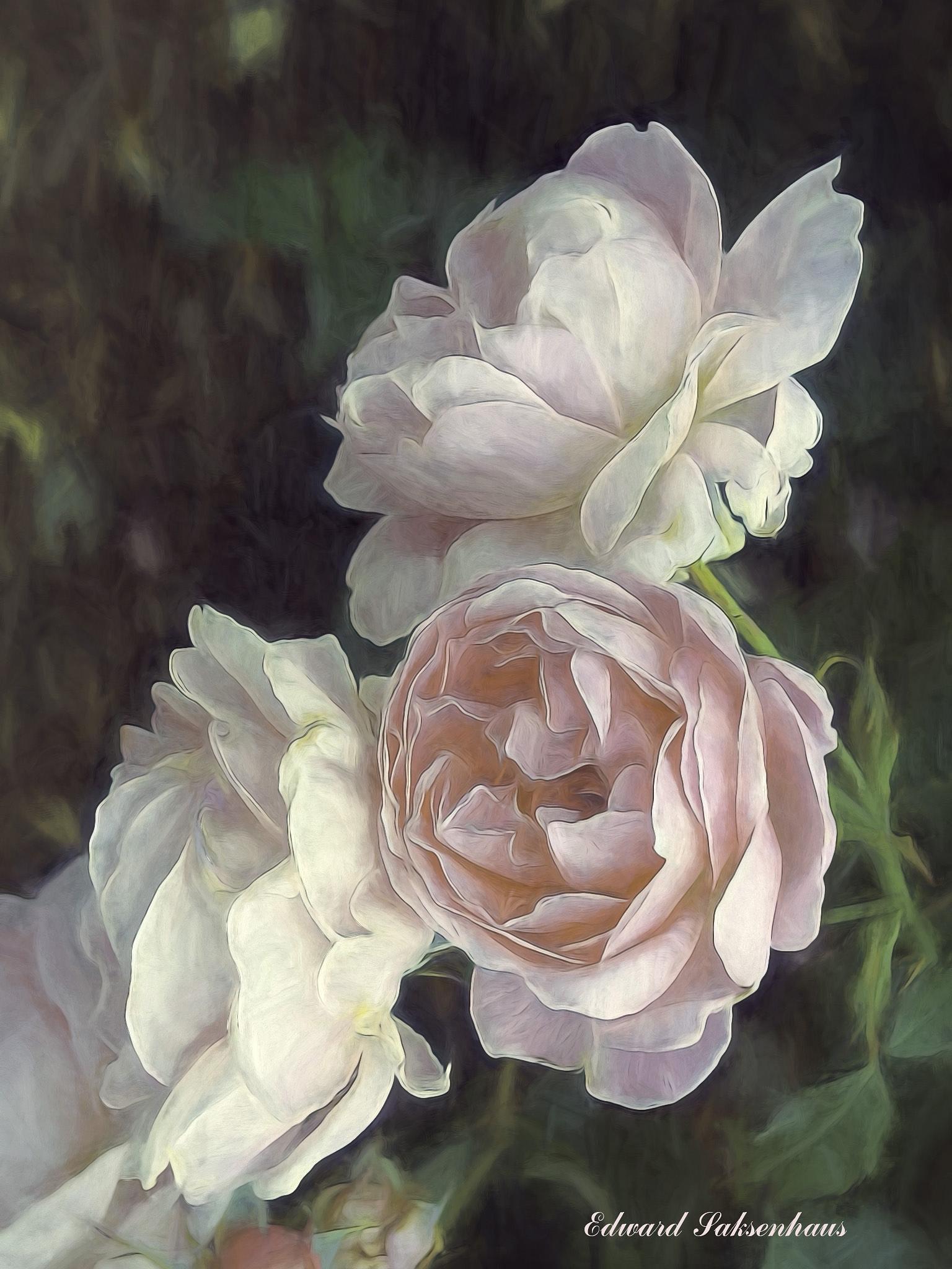 The Three Beautiful Roses by Edward Saksenhaus