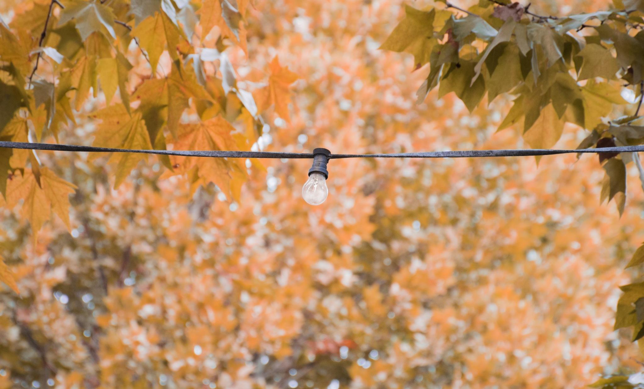 Autumn Light Bulb by Janine Burrow