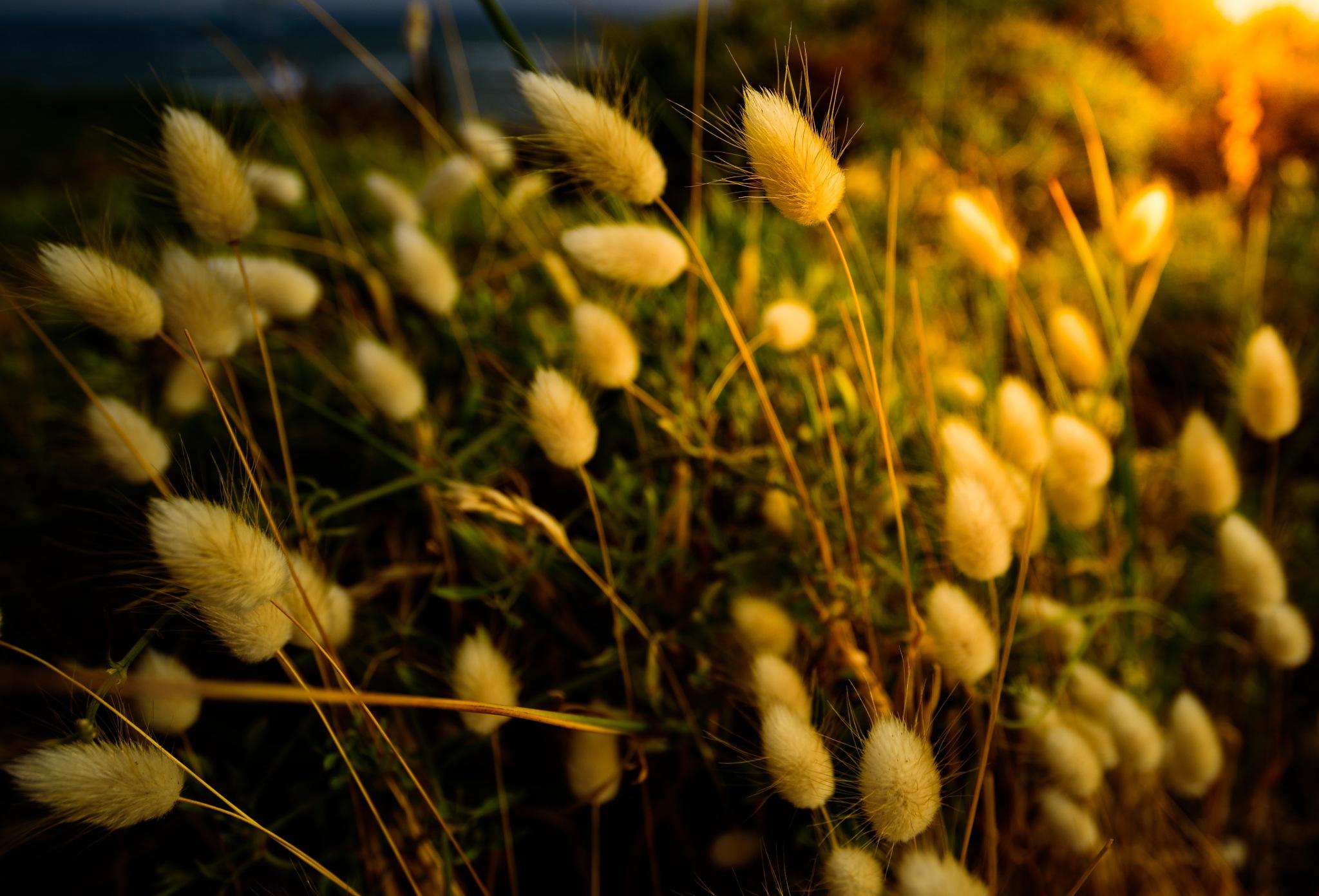 Lights at golden hour by Muntasir