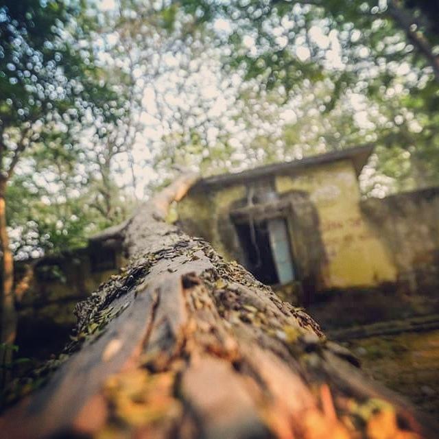 THE NATURE // DA' MOMENTO STUDIOS by Prashant Agarwal