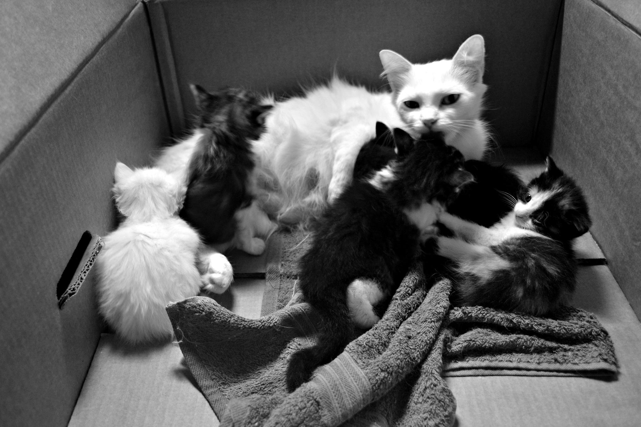 Box of cats by CarlaLuma