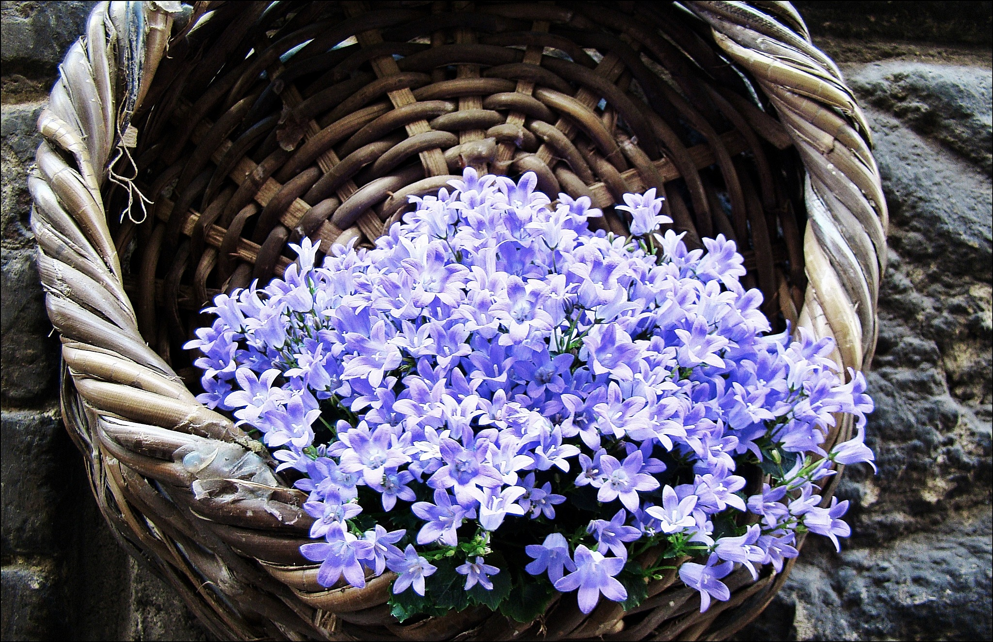 basket of flowers by CarlaLuma