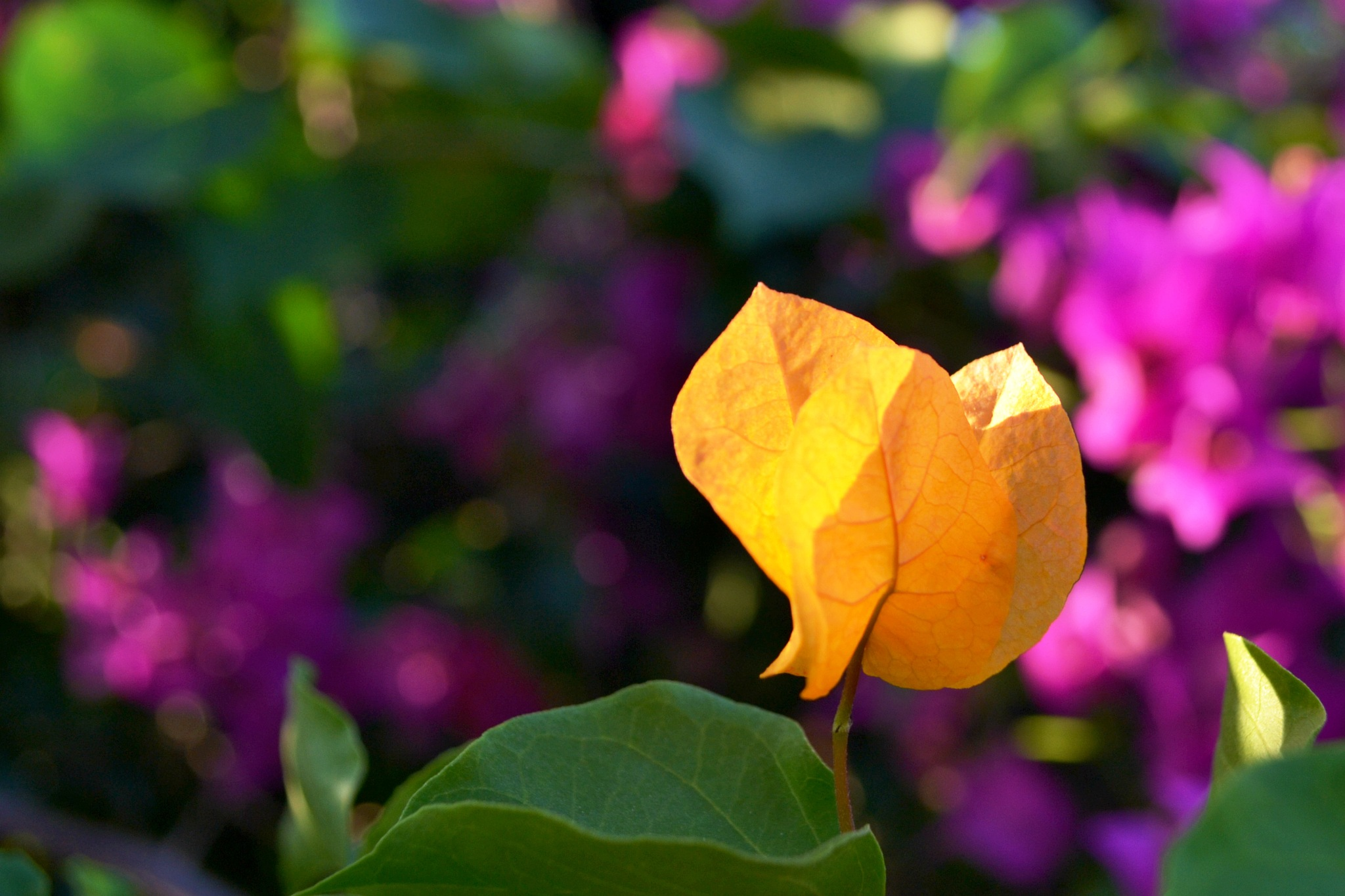 in my garden  by CarlaLuma