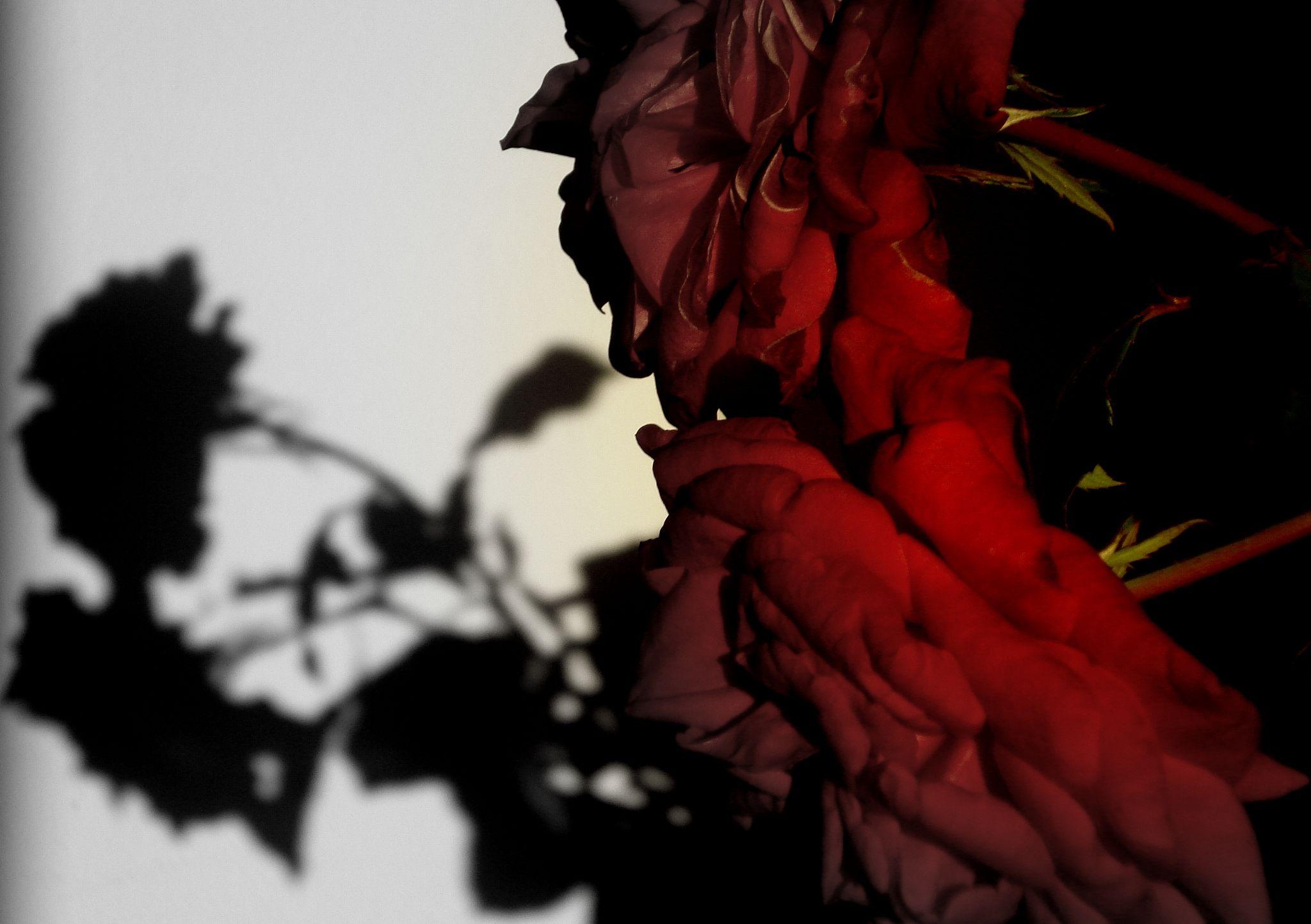 sunset with roses by Ana Botelho