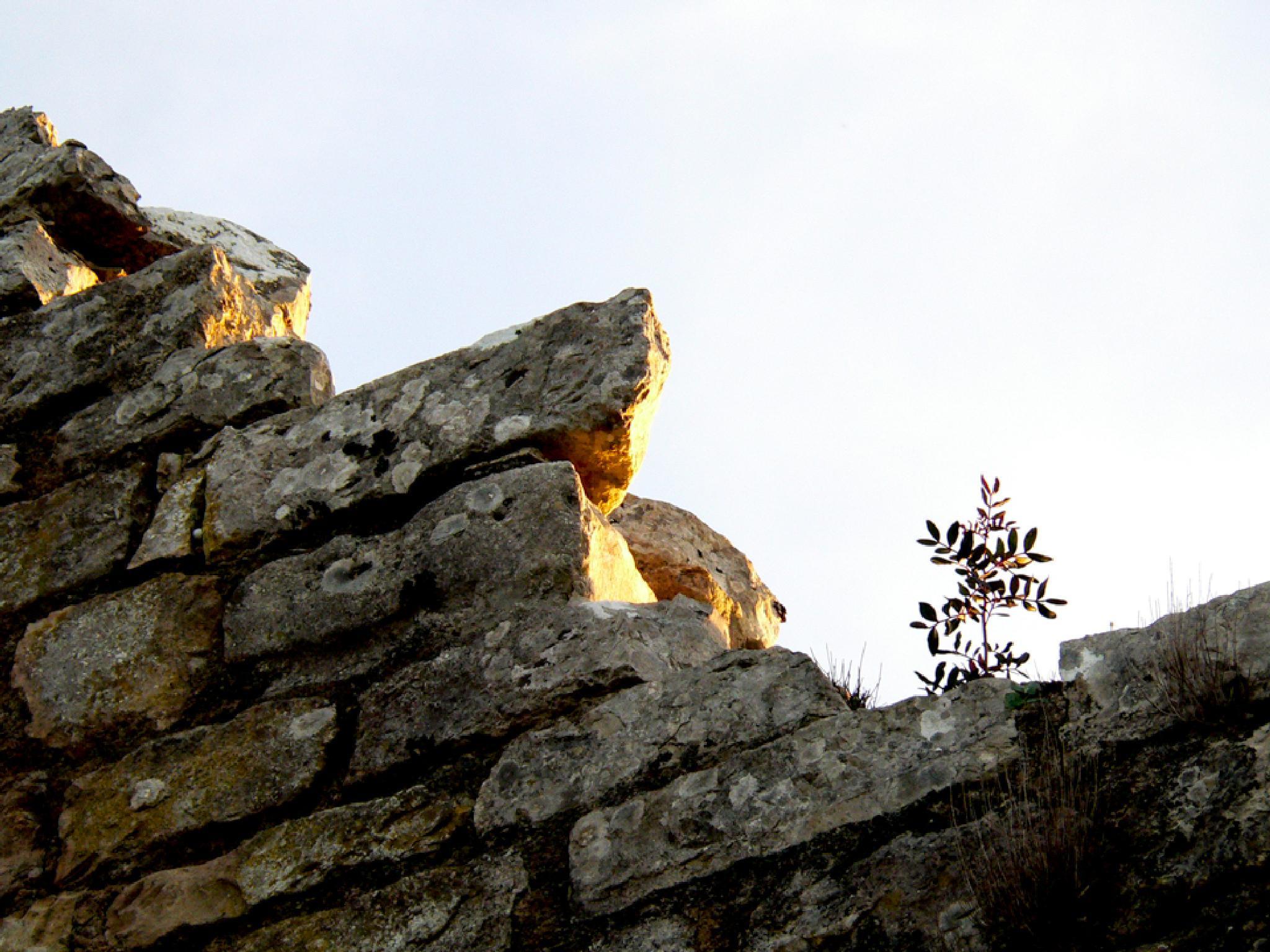 pedras by Ana Botelho
