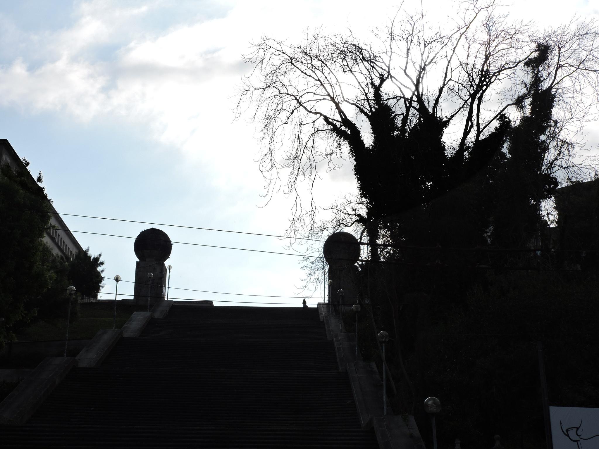 Escadas Monumentais by Ana Botelho