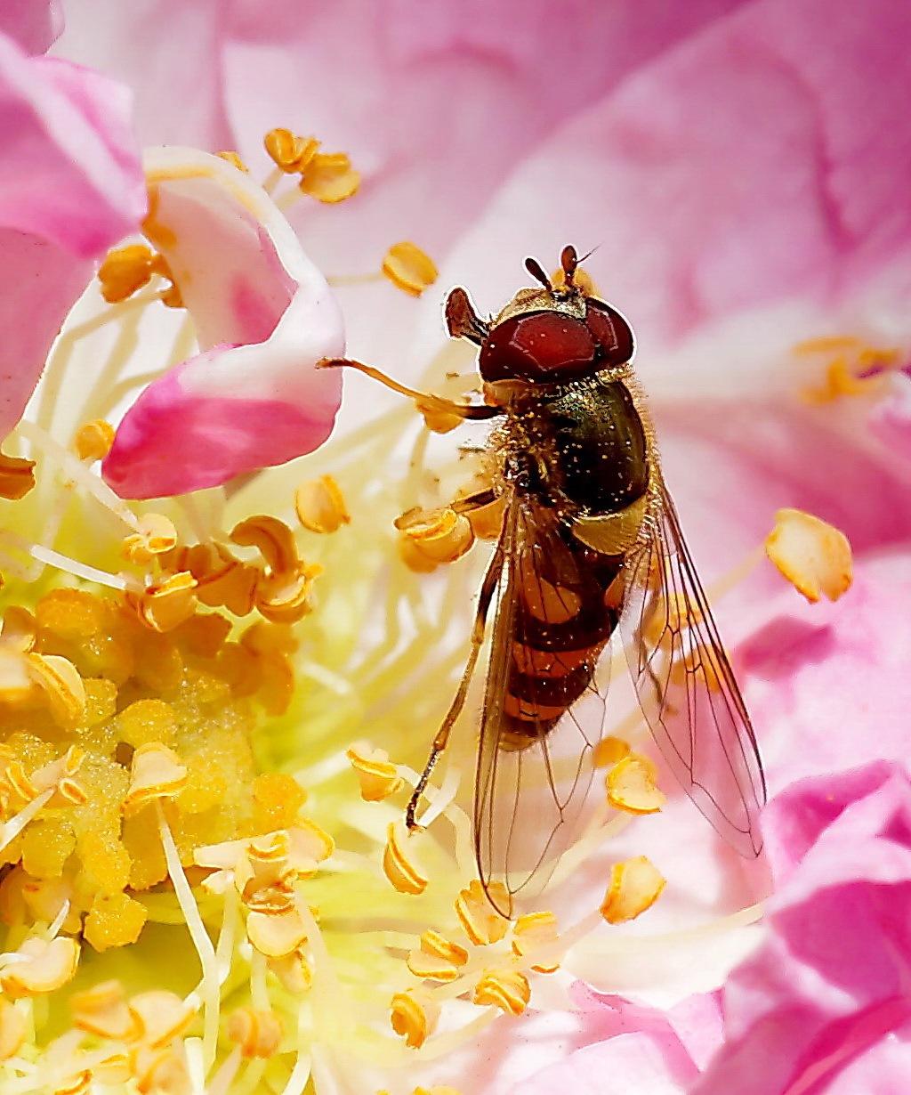 Recherche de pollen by BernardSerge