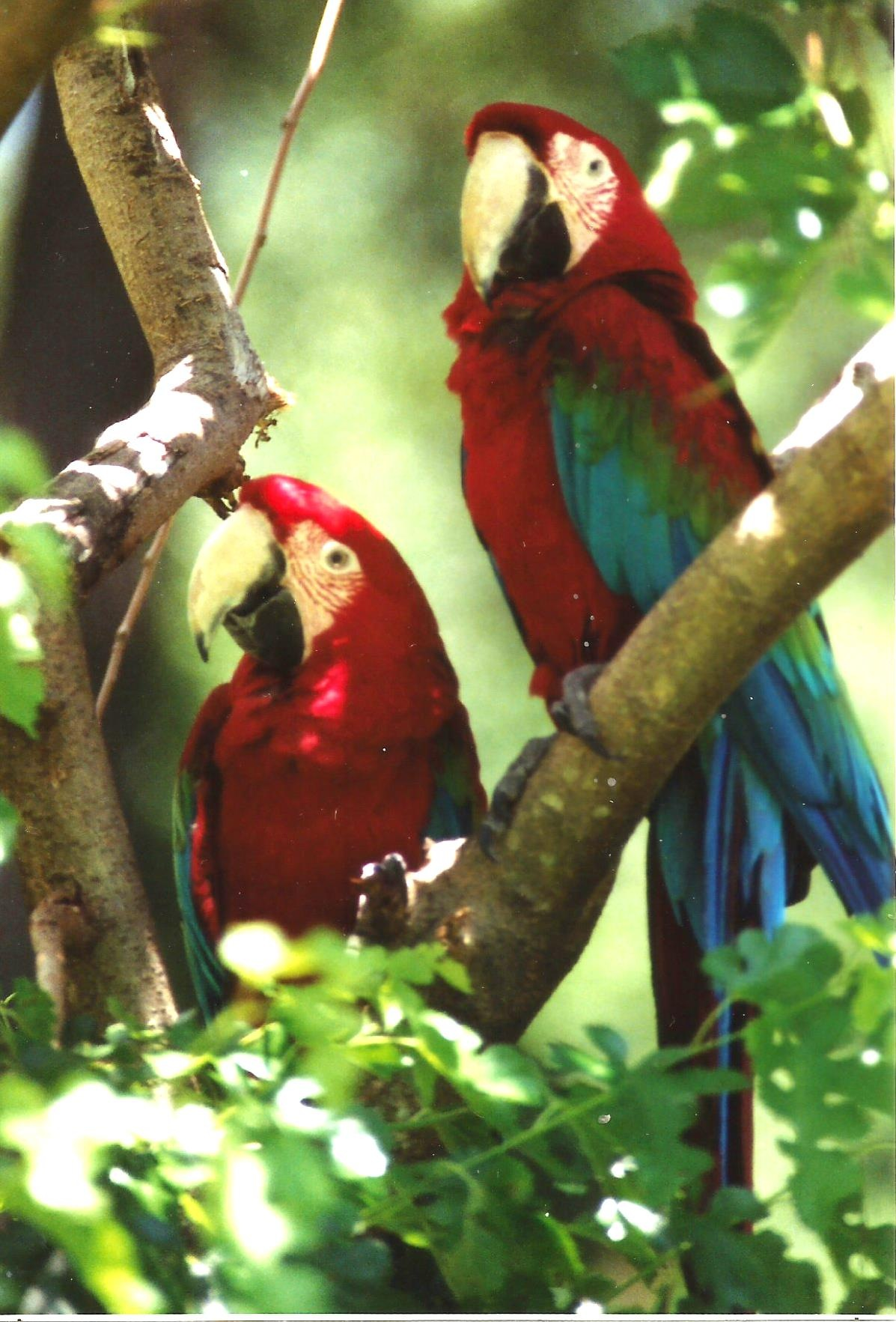 PICTURE PERFECT PARROTS by Hope Atwood Dayhoff