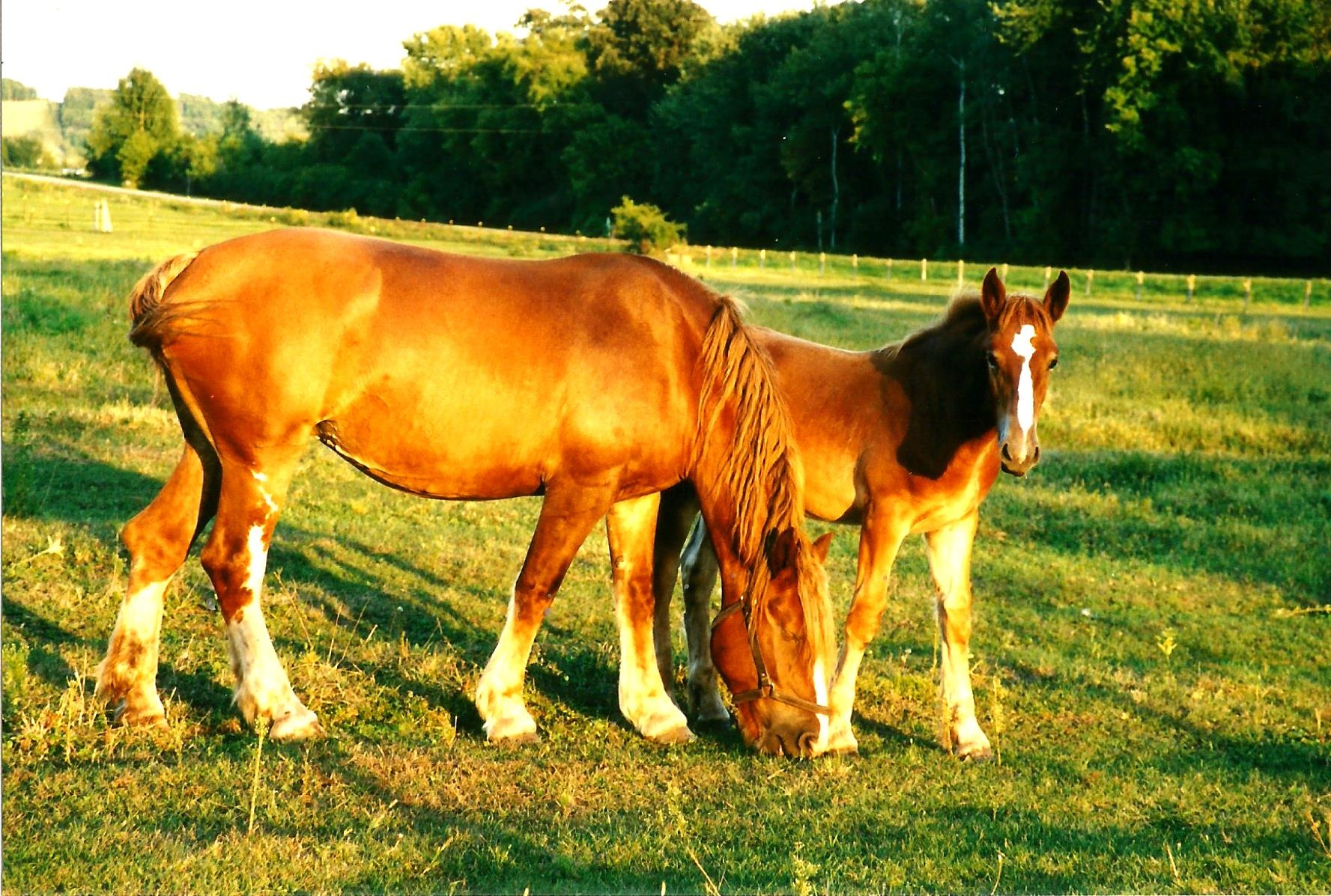 DRAFT HORSE TREASURES by Hope Atwood Dayhoff