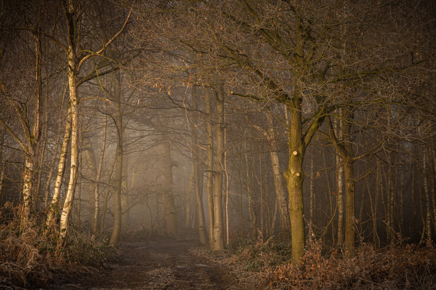 Woodland Sunlight by Brian Roberts