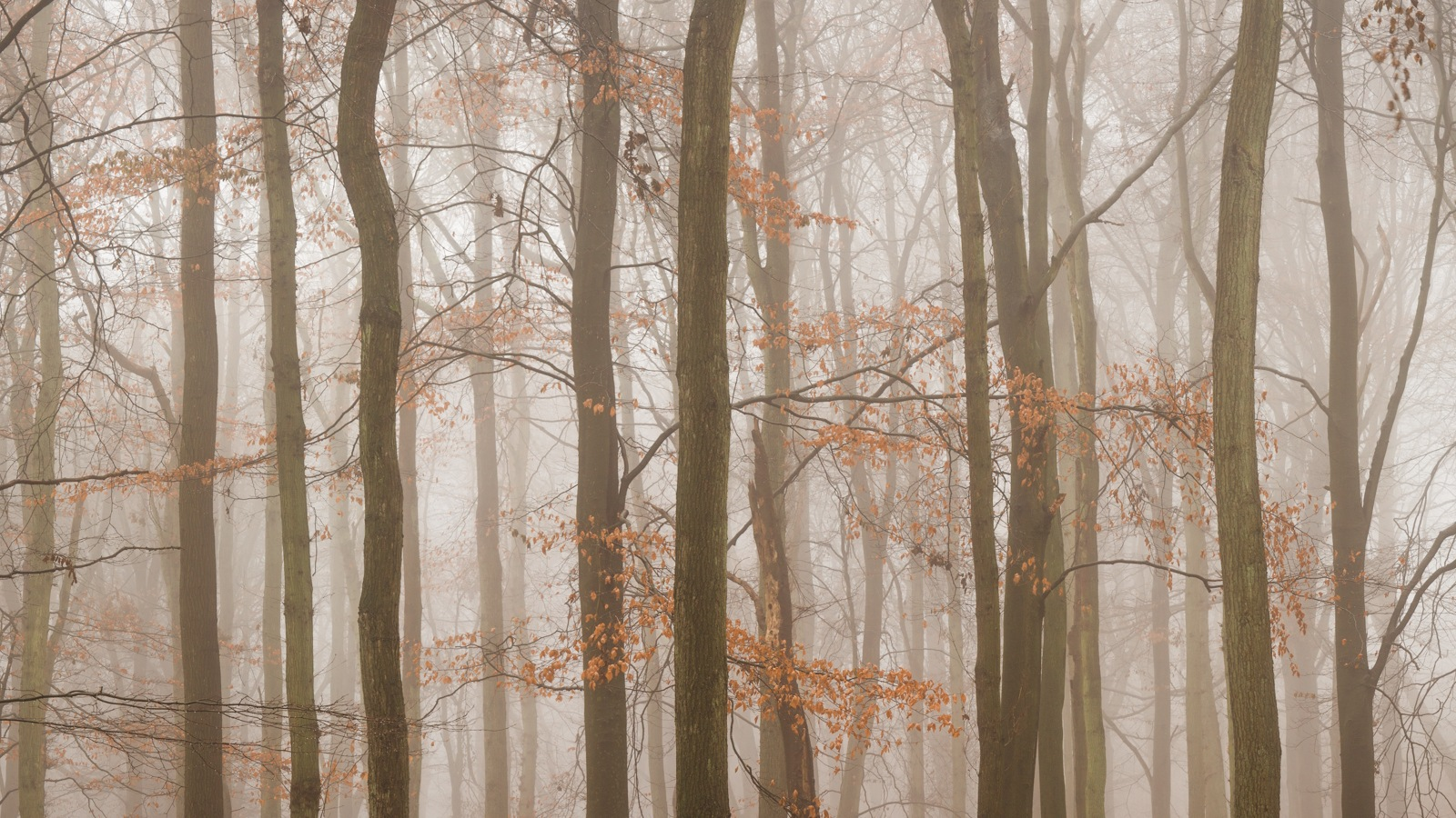 Dockey Woods by Brian Roberts