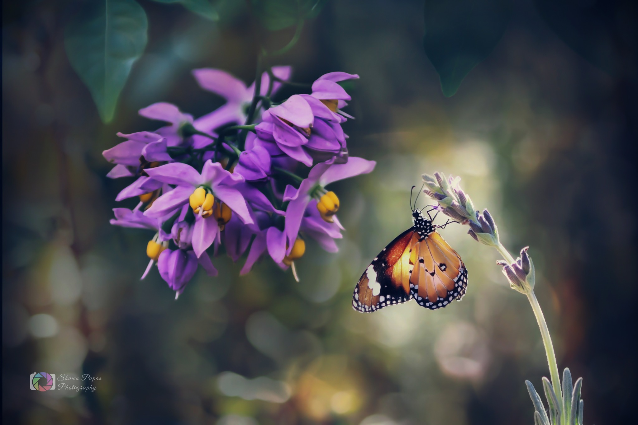 flower and butterfly by Shawn Papas