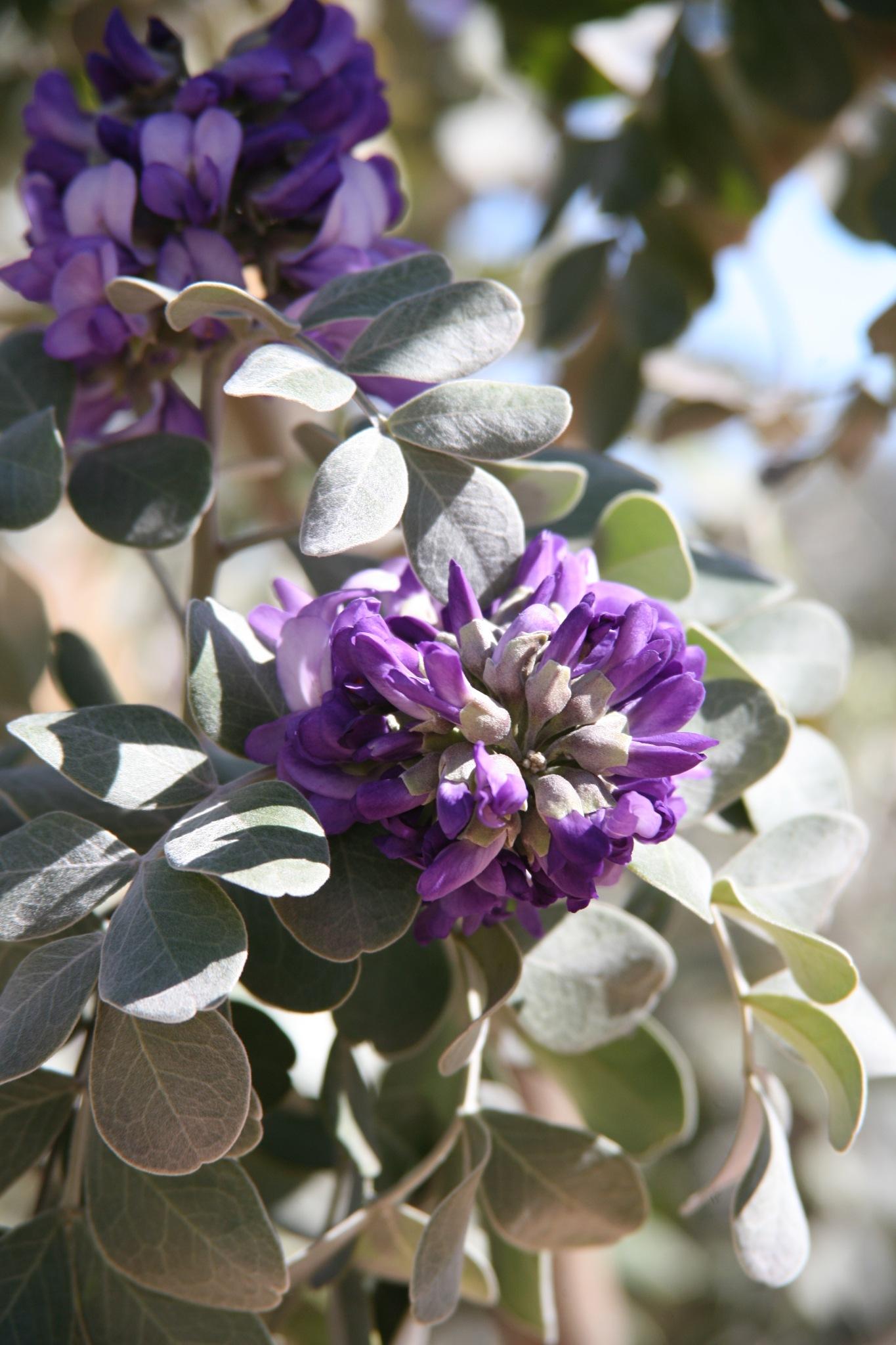 Bloom your Dreams by TucsonHawk10
