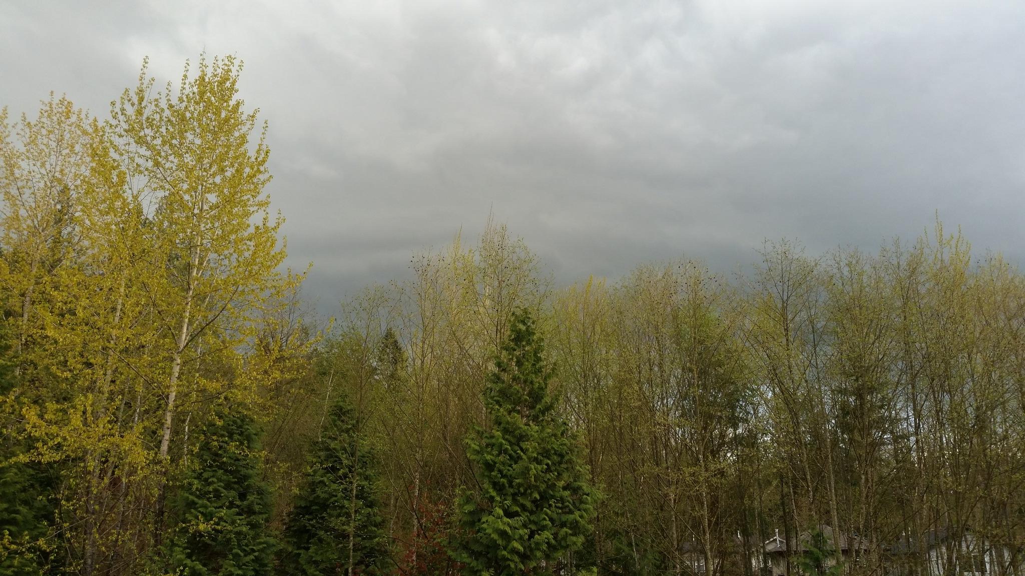 Clouds of green by AJ Bateman