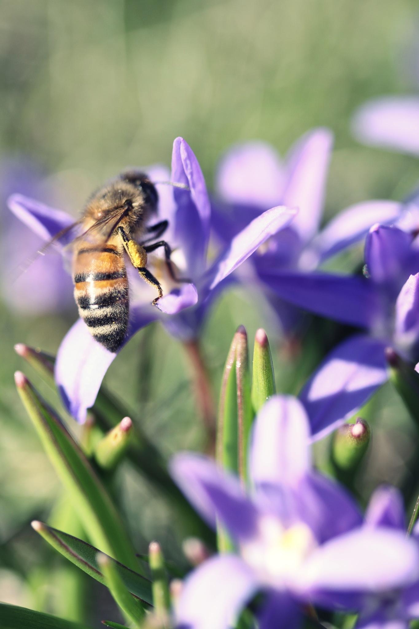 spring bee. by Sara Louise Lindgren