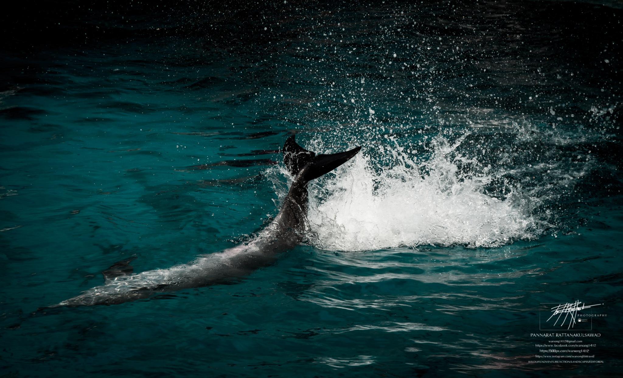 Dolphin Action movement of motion. by Kumpa P. Rattanakulsawad