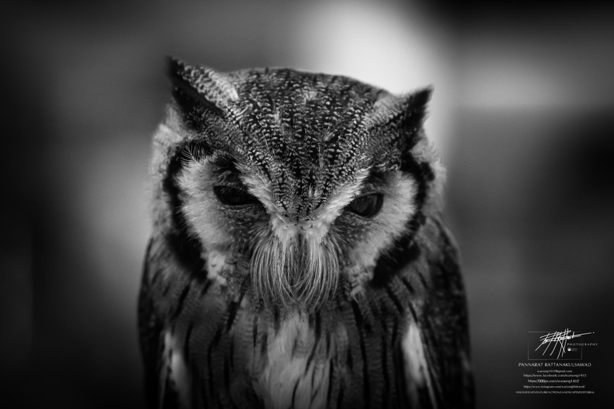 Feeling not bad baby owl dark. by Kumpa P. Rattanakulsawad