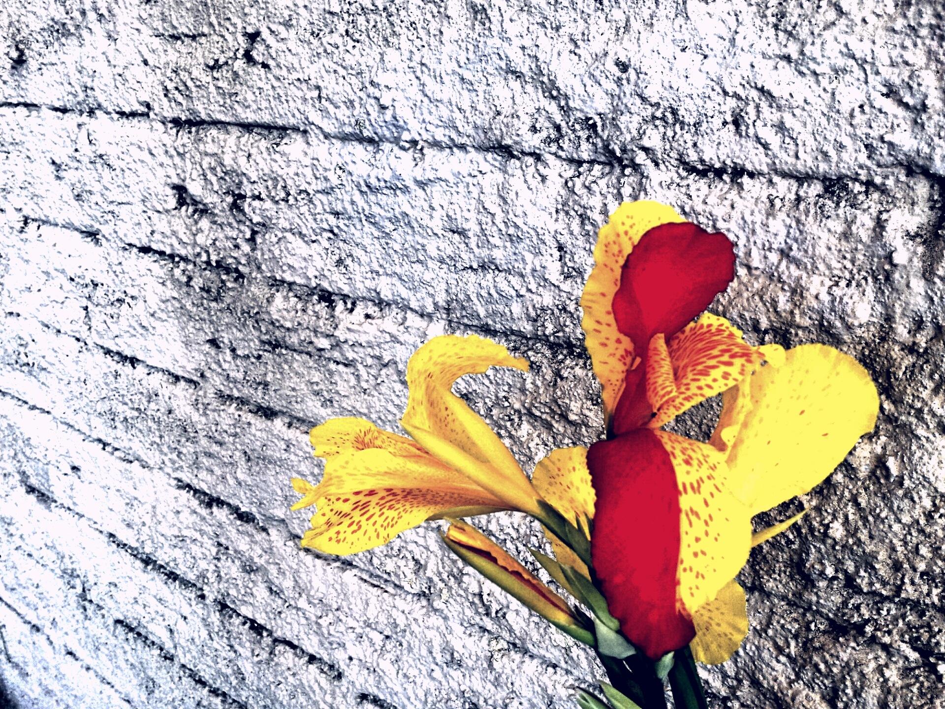 A Flor by Adan D'Agostini