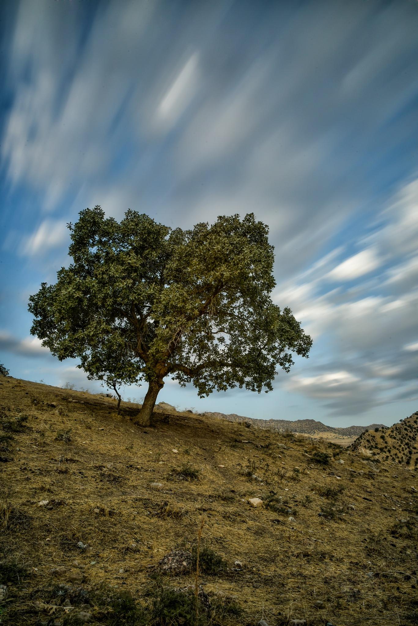 Untitled by Dlshad Darwesh
