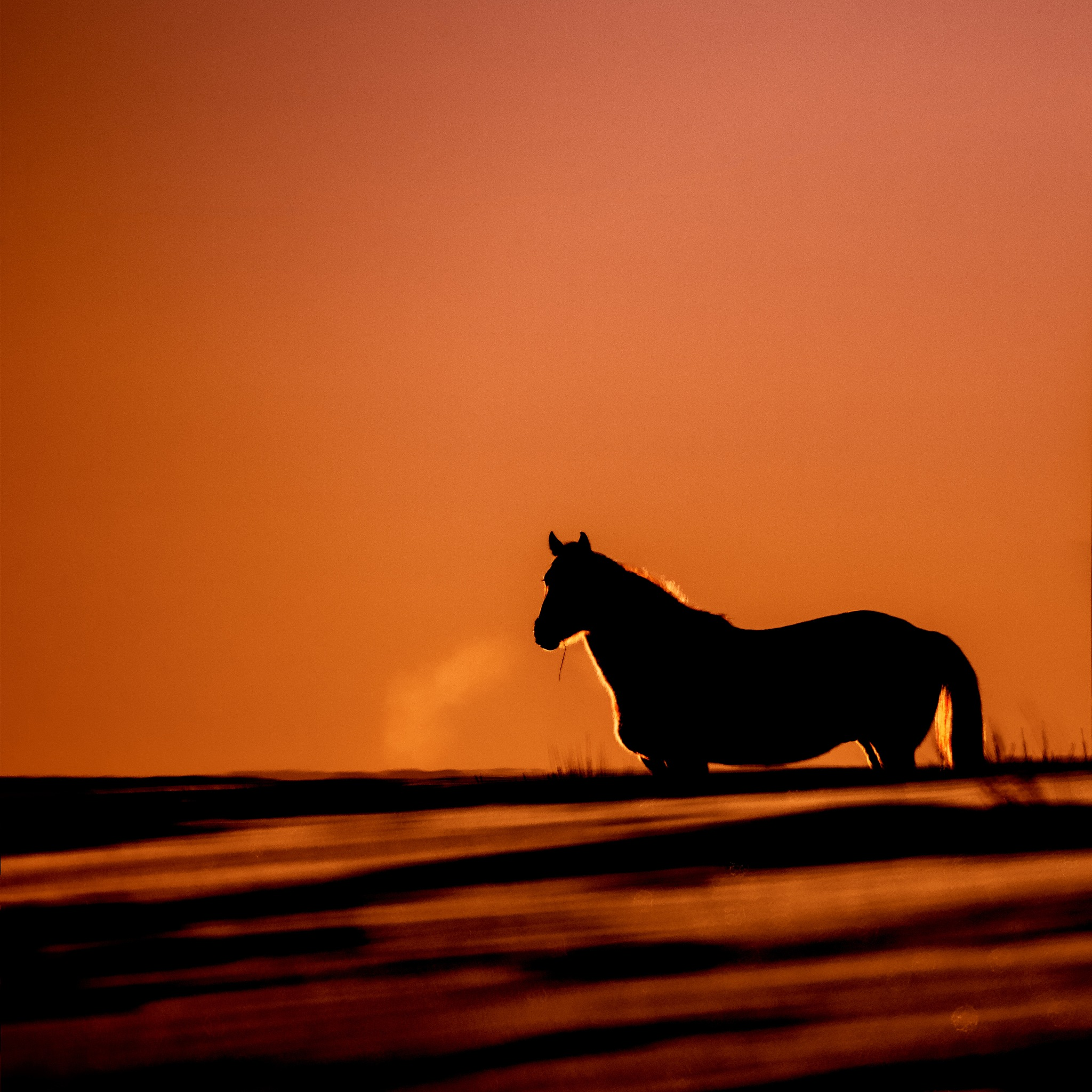 Horse in red sunset by Dianachang