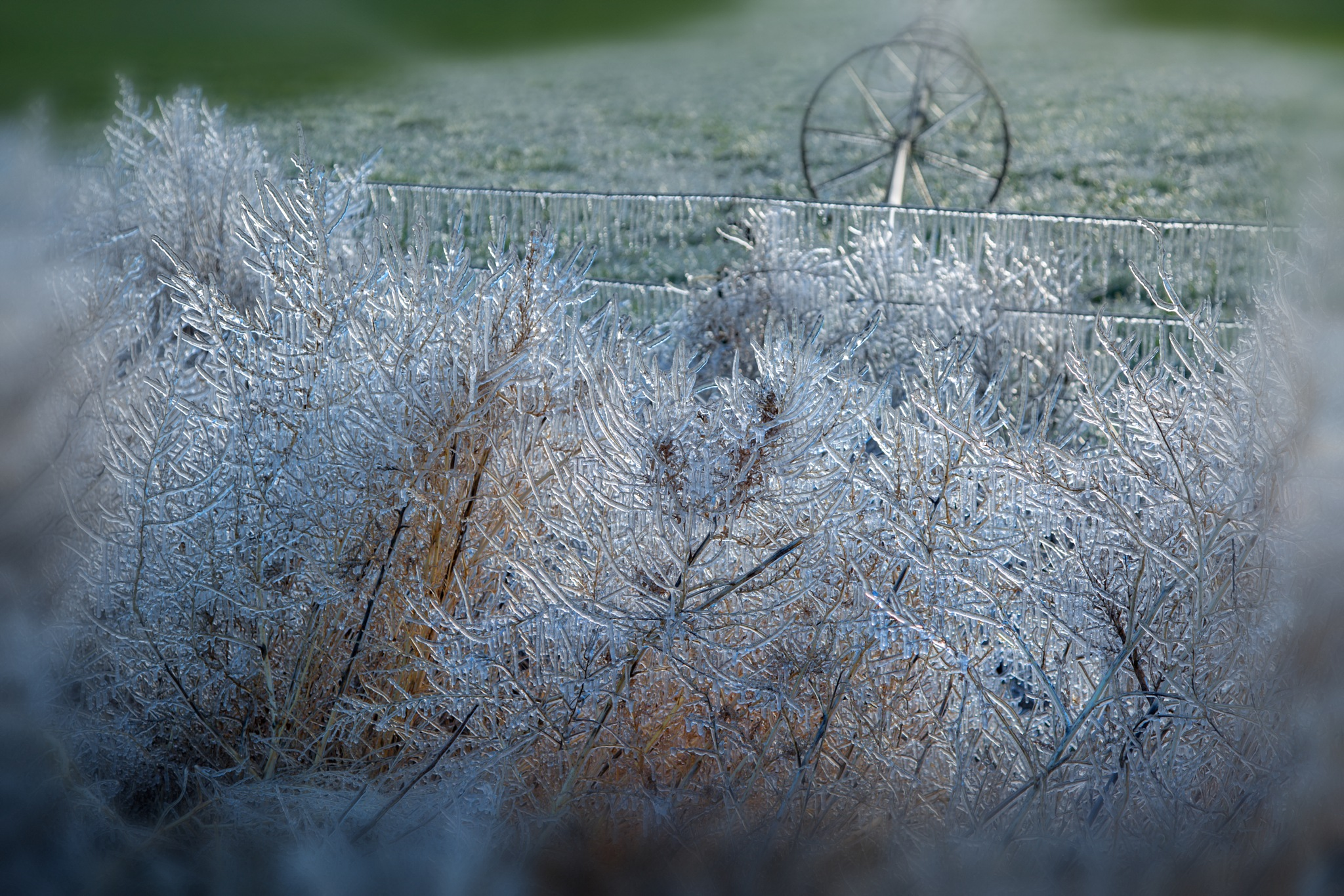 A frosty morning by Dianachang
