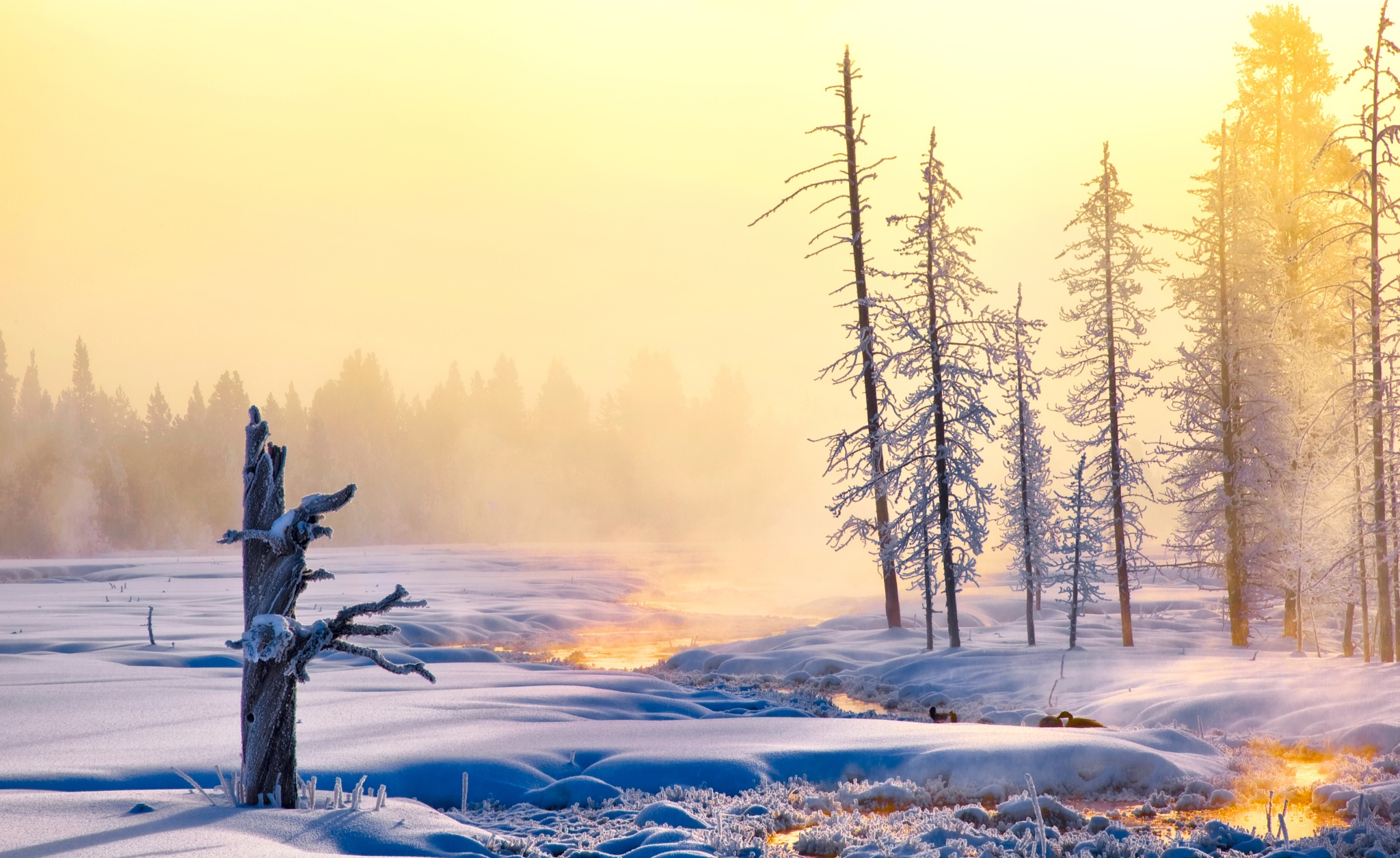 Foggy morning by Dianachang