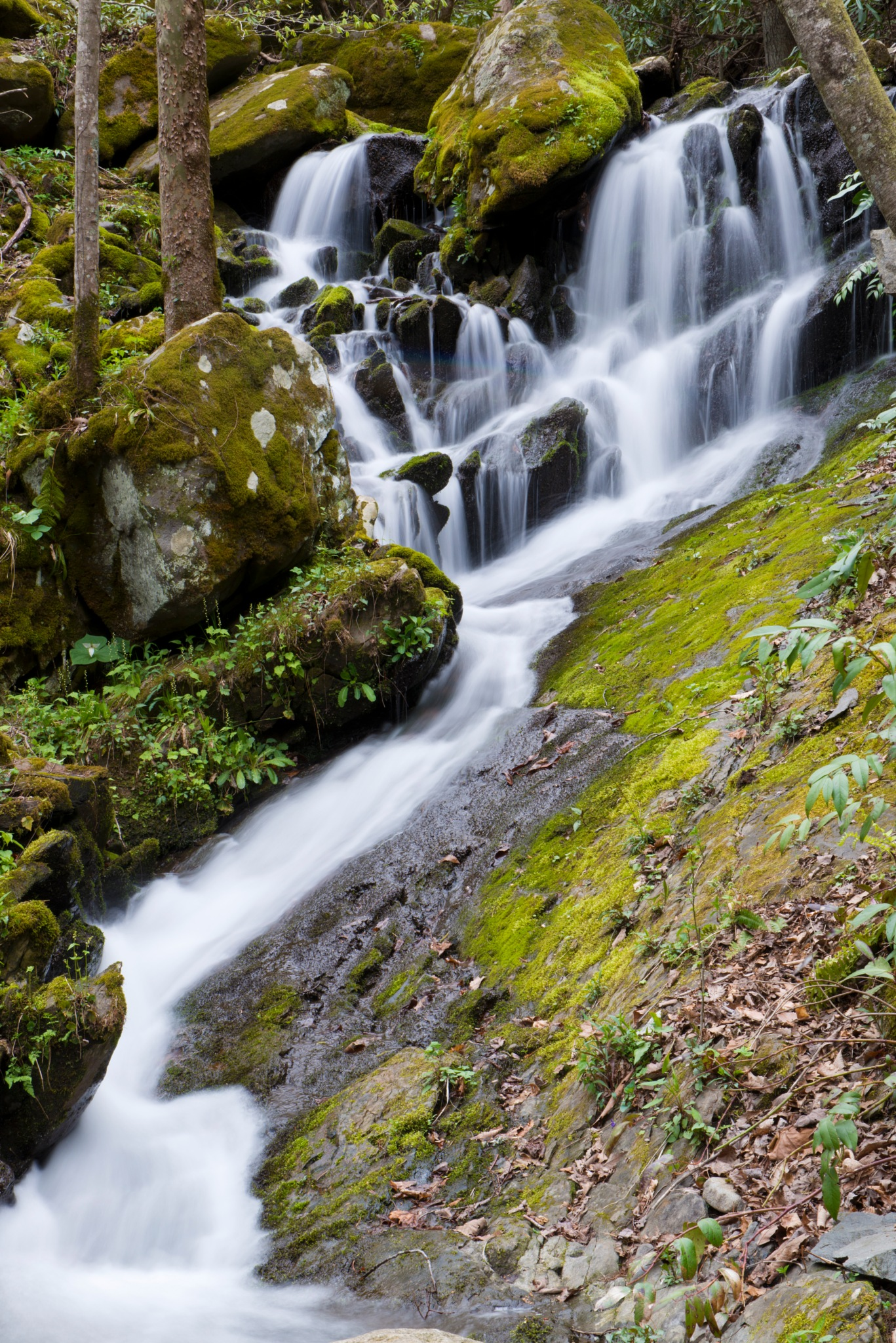 Smoky Mts Waterfall by Kevin Donnelly