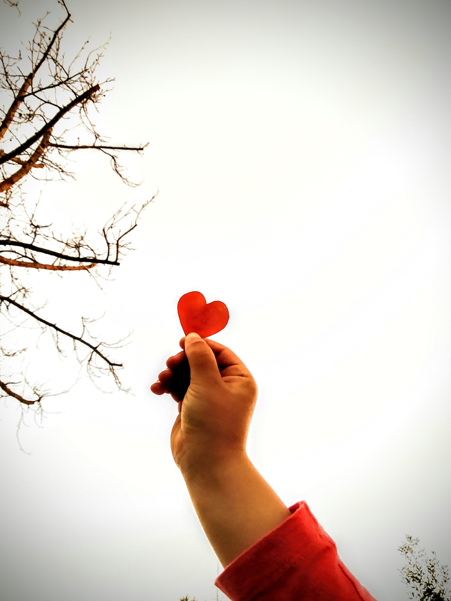 Photo in Family #love #valentine's #heart #red #sky #tree