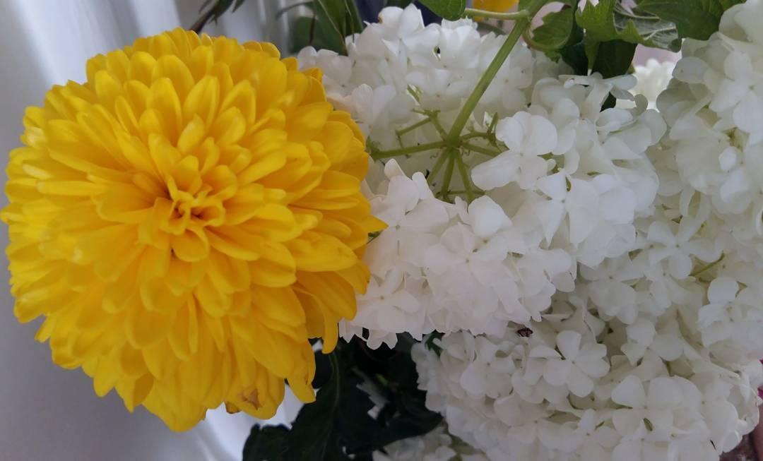 flowers by Malihe_h_n