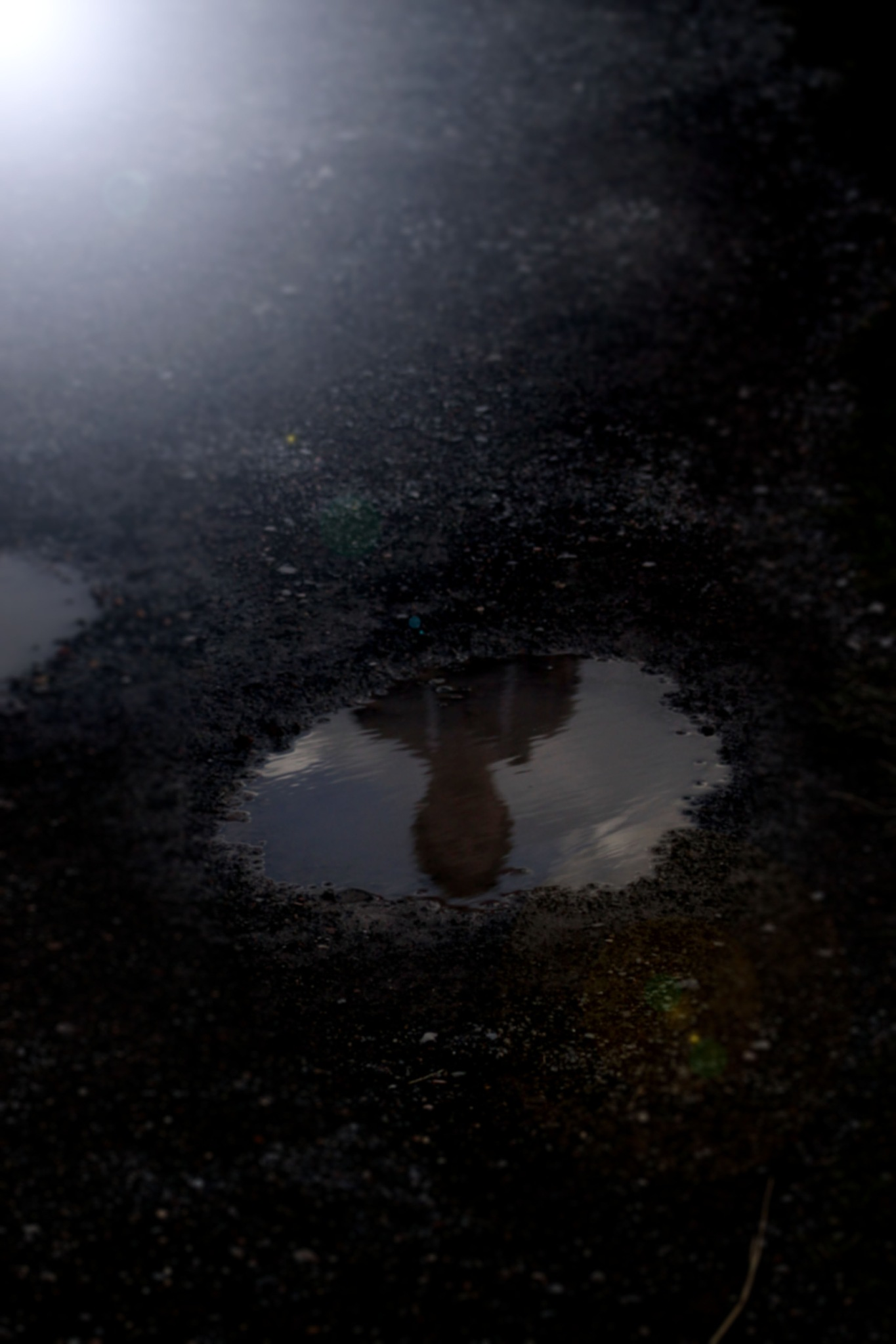 Surreal puddle reflection by Rudi Beauchamp