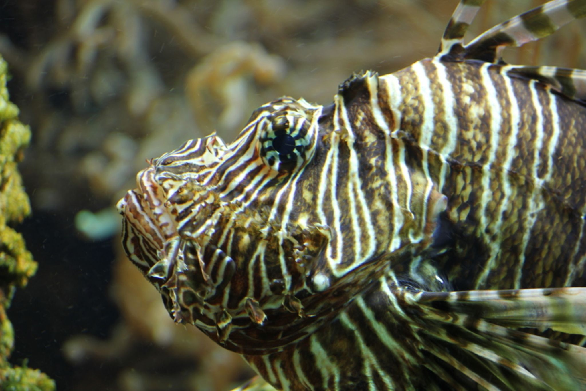 Angry Fish by Henry Geerling