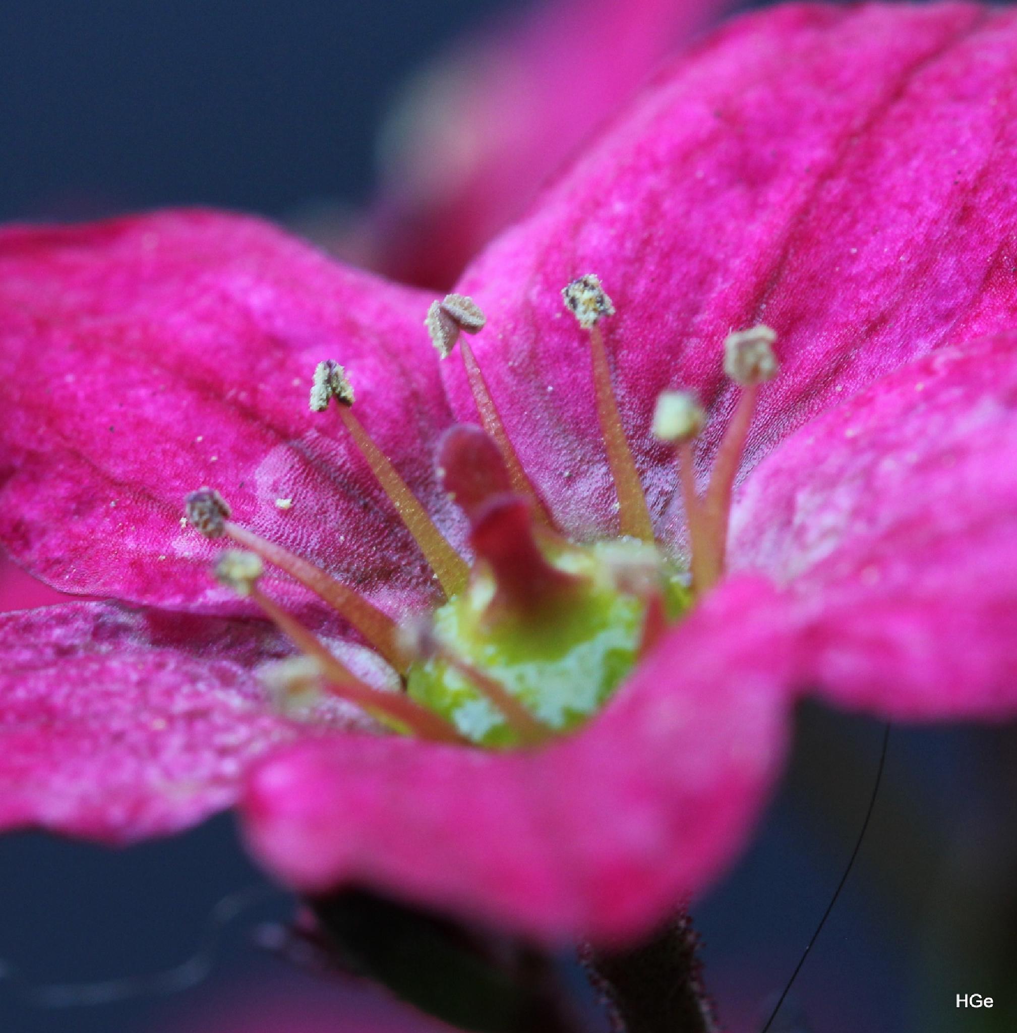 Little flower by Henry Geerling