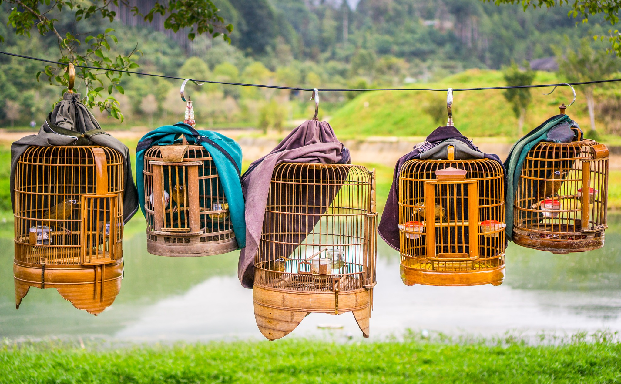 Photo in Random #bird #cage #hobby #hanging #bac ha #market #vietnam #gary gillette
