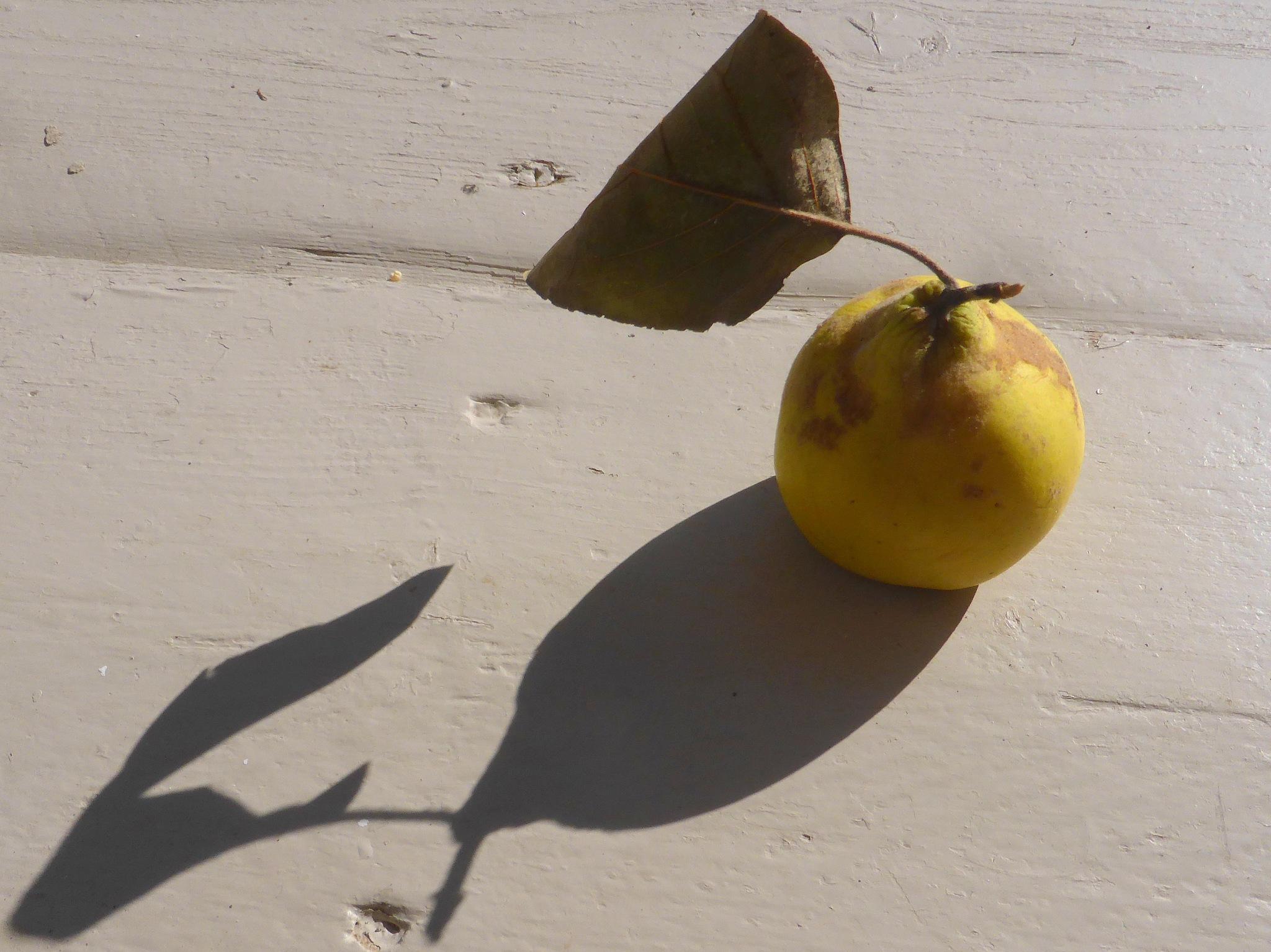 Pear in the autumn sun by Nicola Alocci