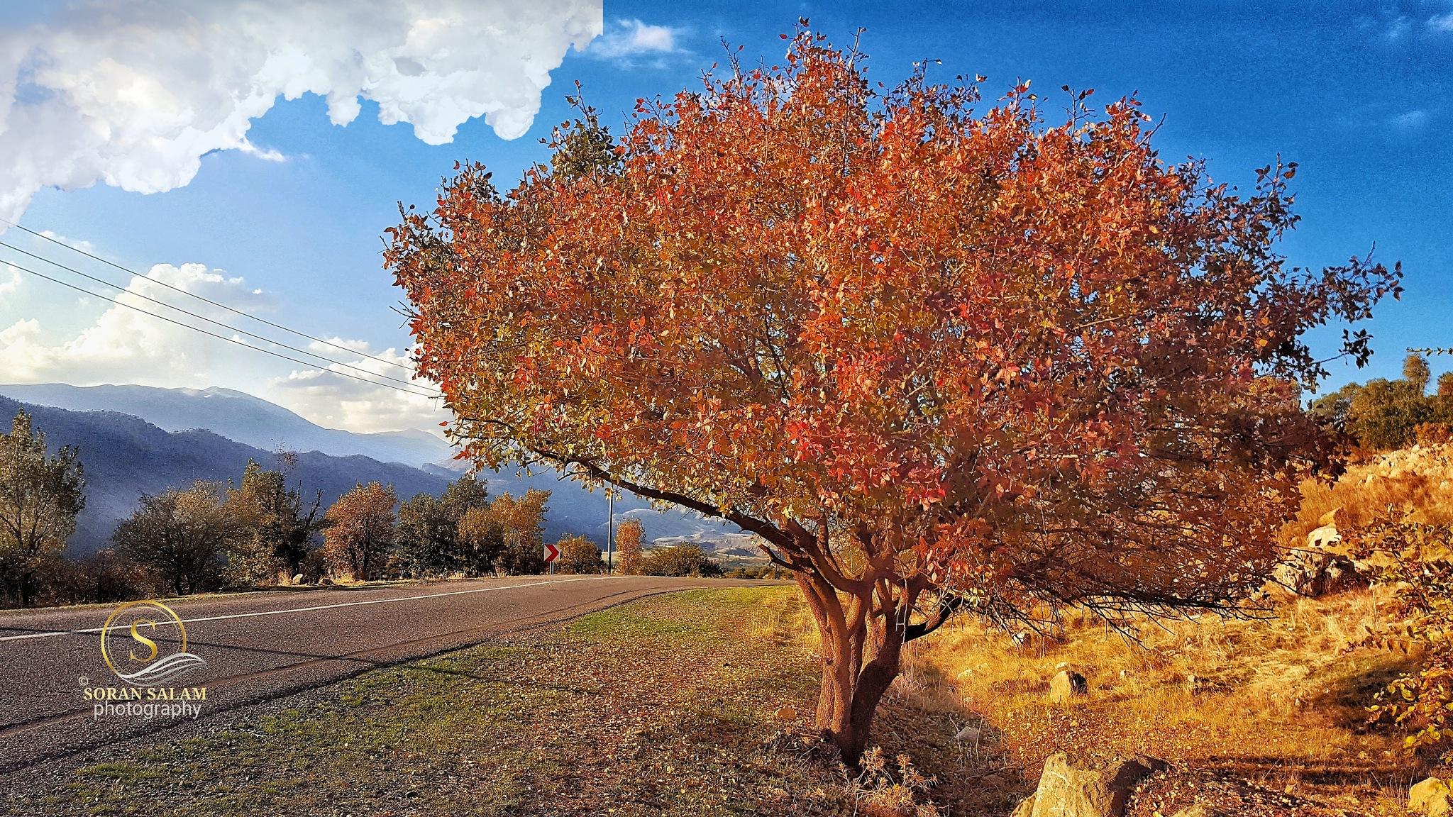 nature by Soran Salam .. photography